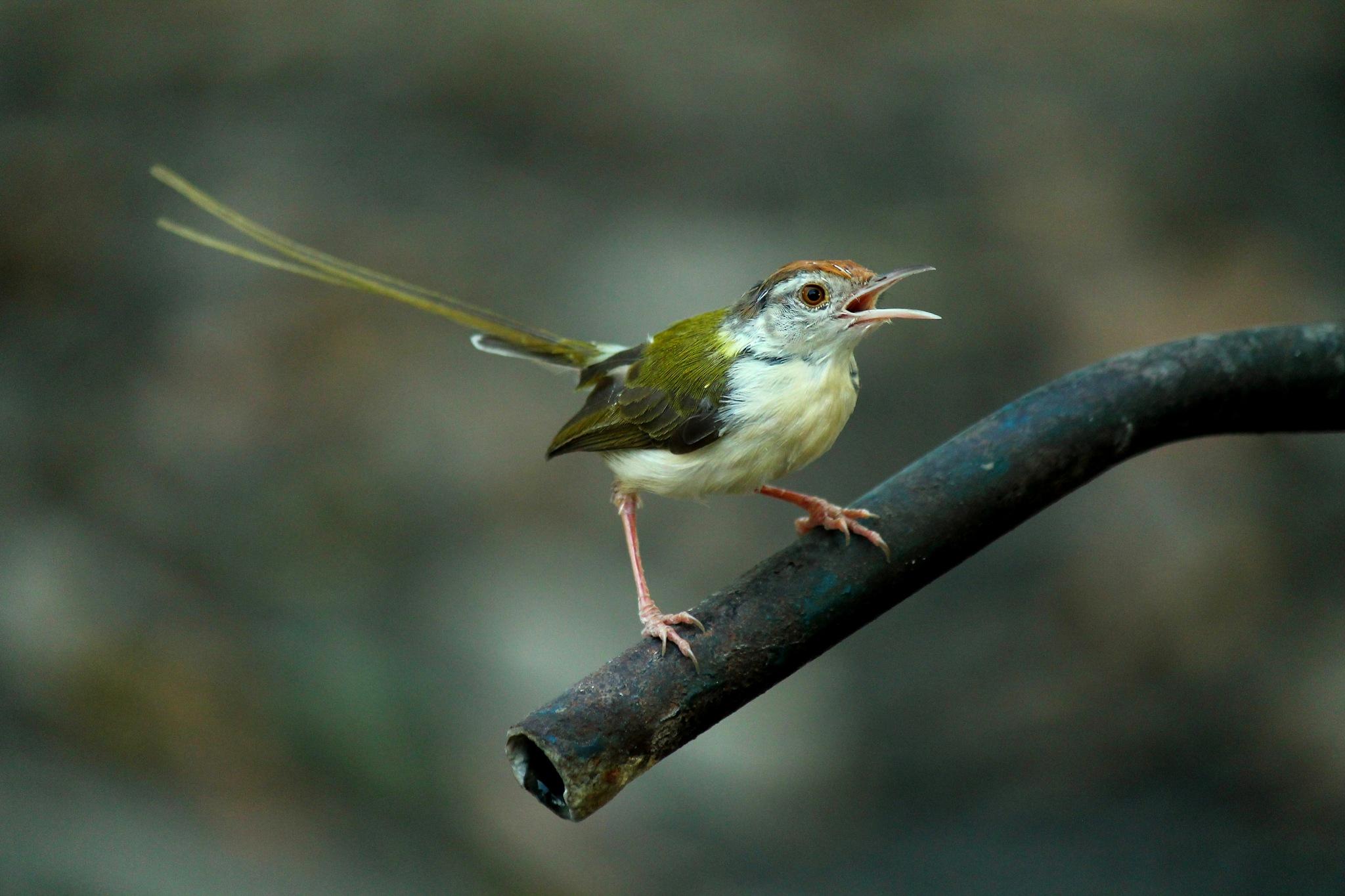 Bird... by RahulkarRD
