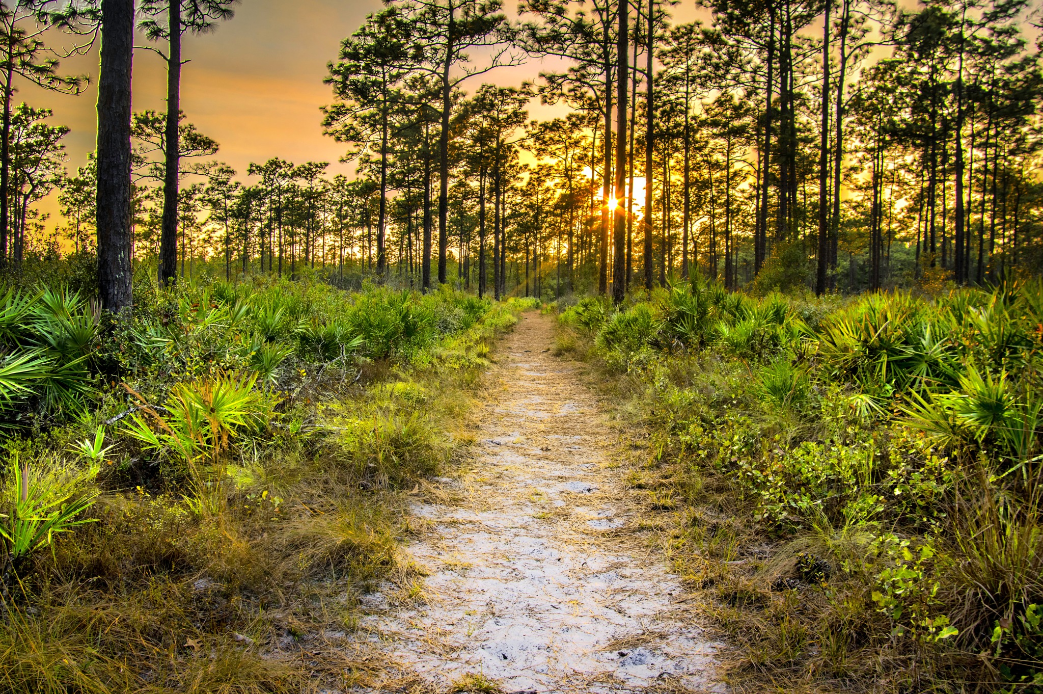 The Path by kyzerzoze