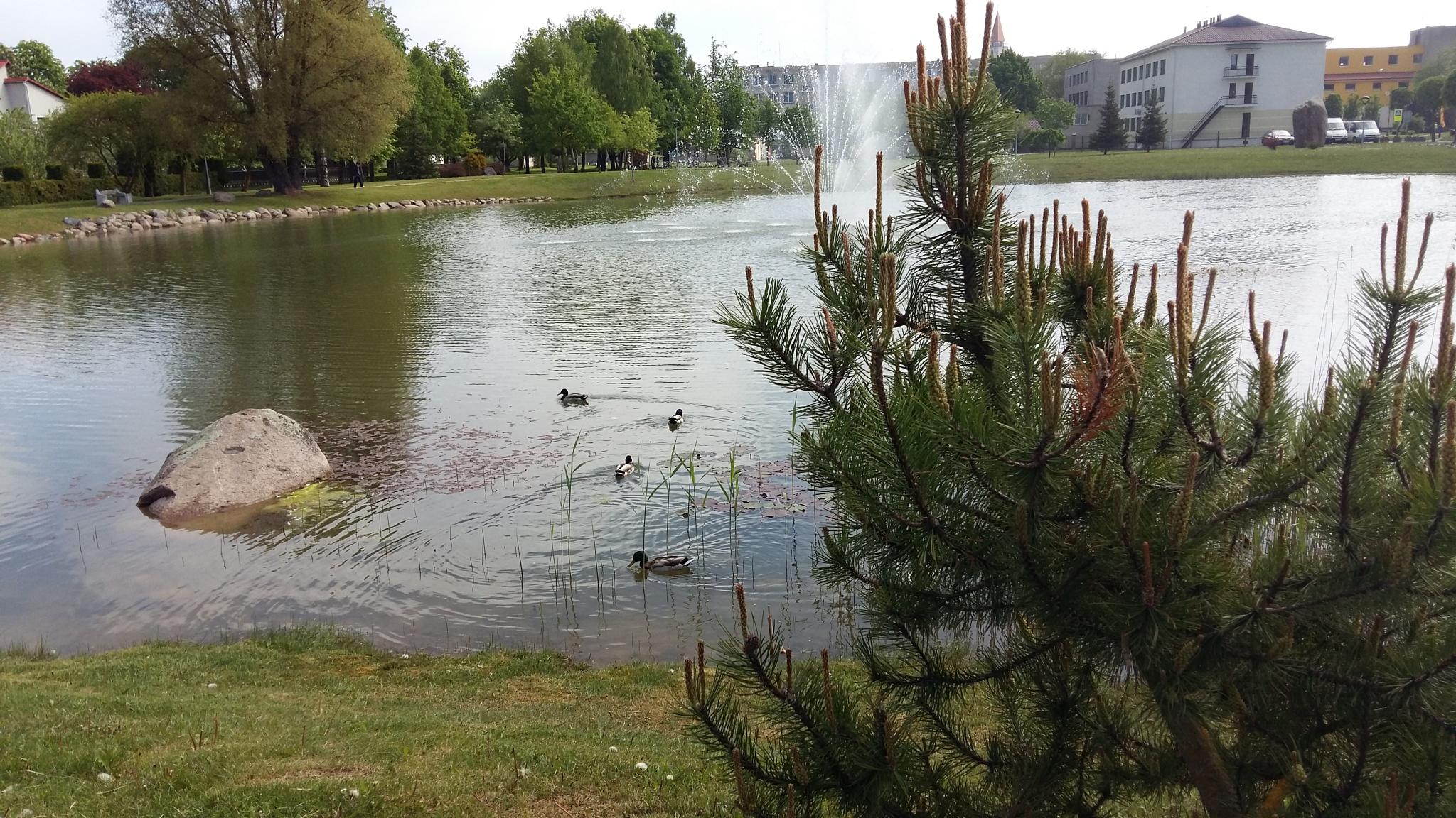 Pond in city. by uzkuraitiene62