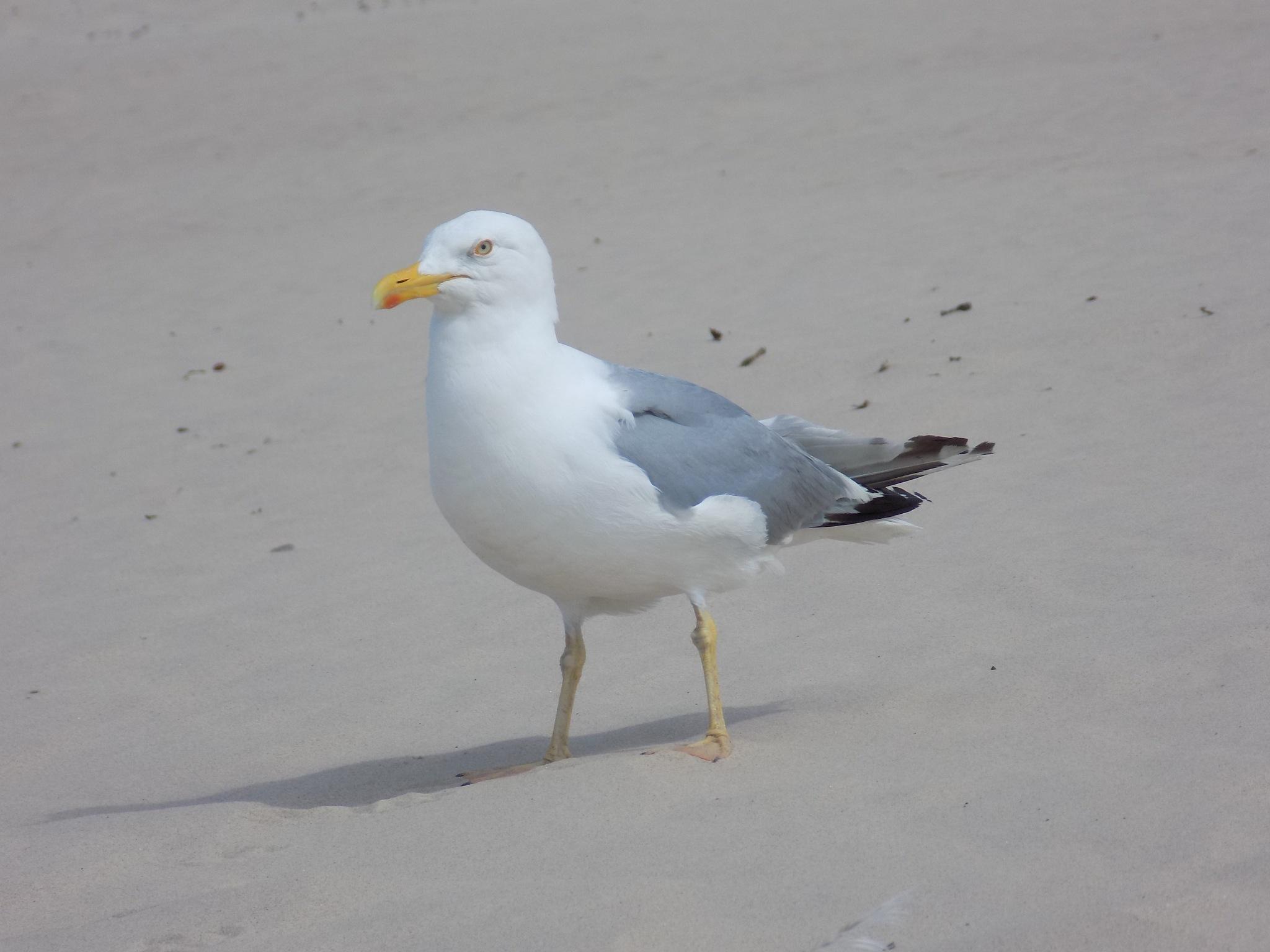 Bird by uzkuraitiene62