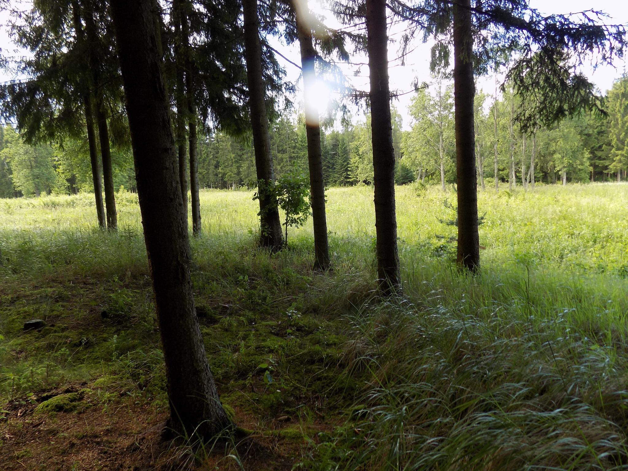 In the summer by uzkuraitiene62