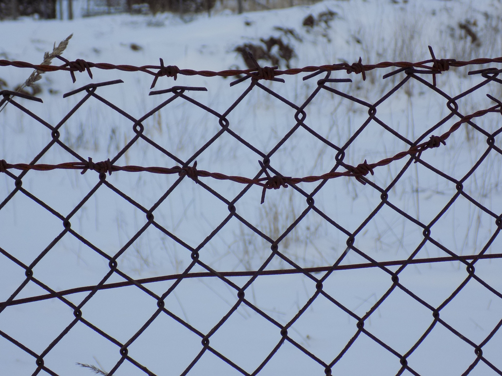 Fence by uzkuraitiene62