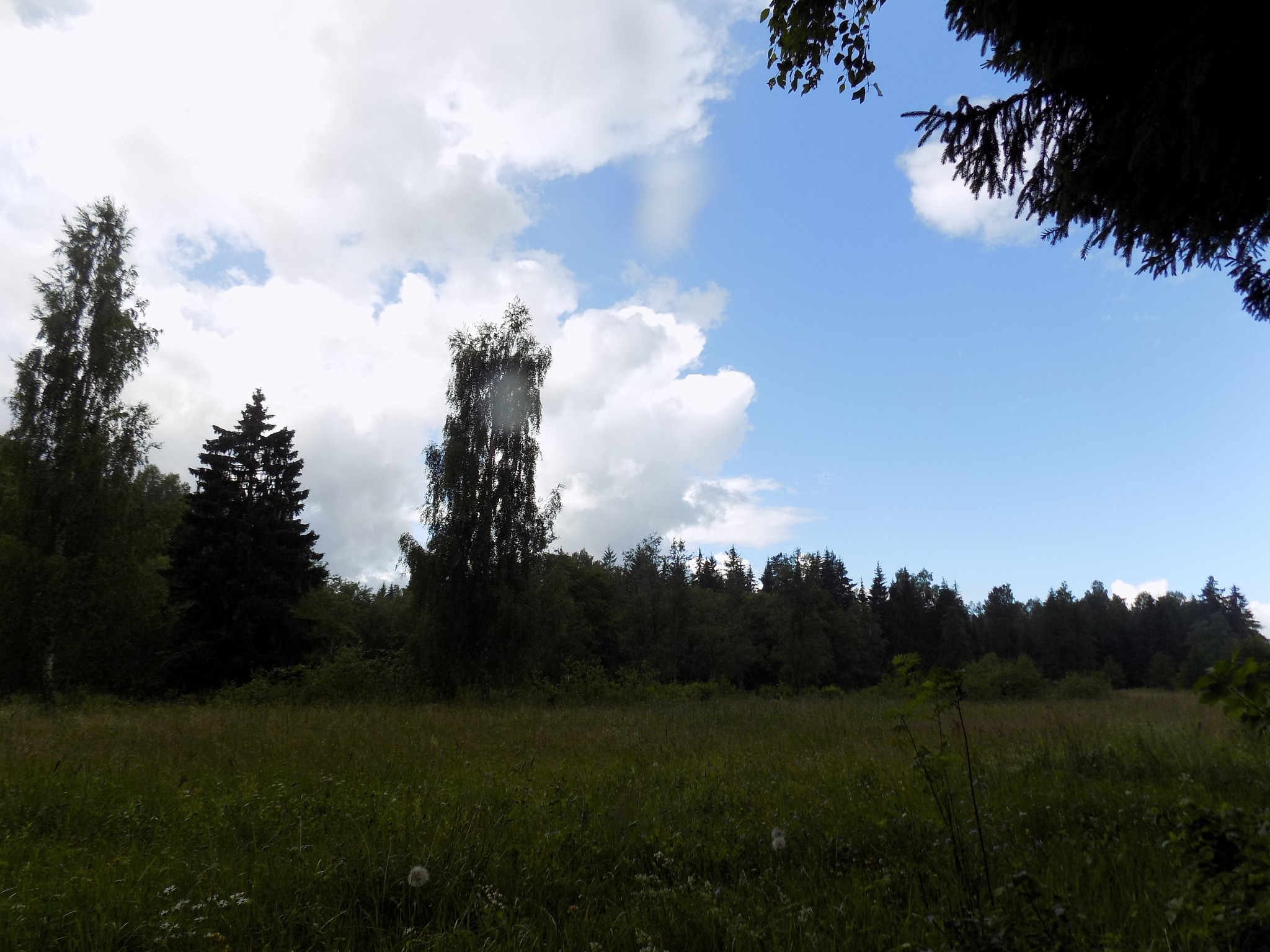 Nature in the summer by uzkuraitiene62