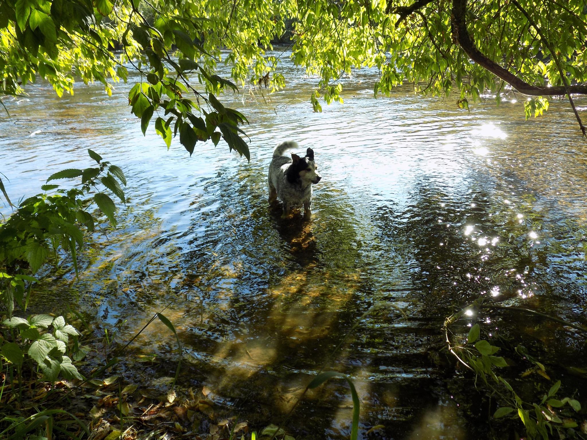 My dog likes to swim by uzkuraitiene62