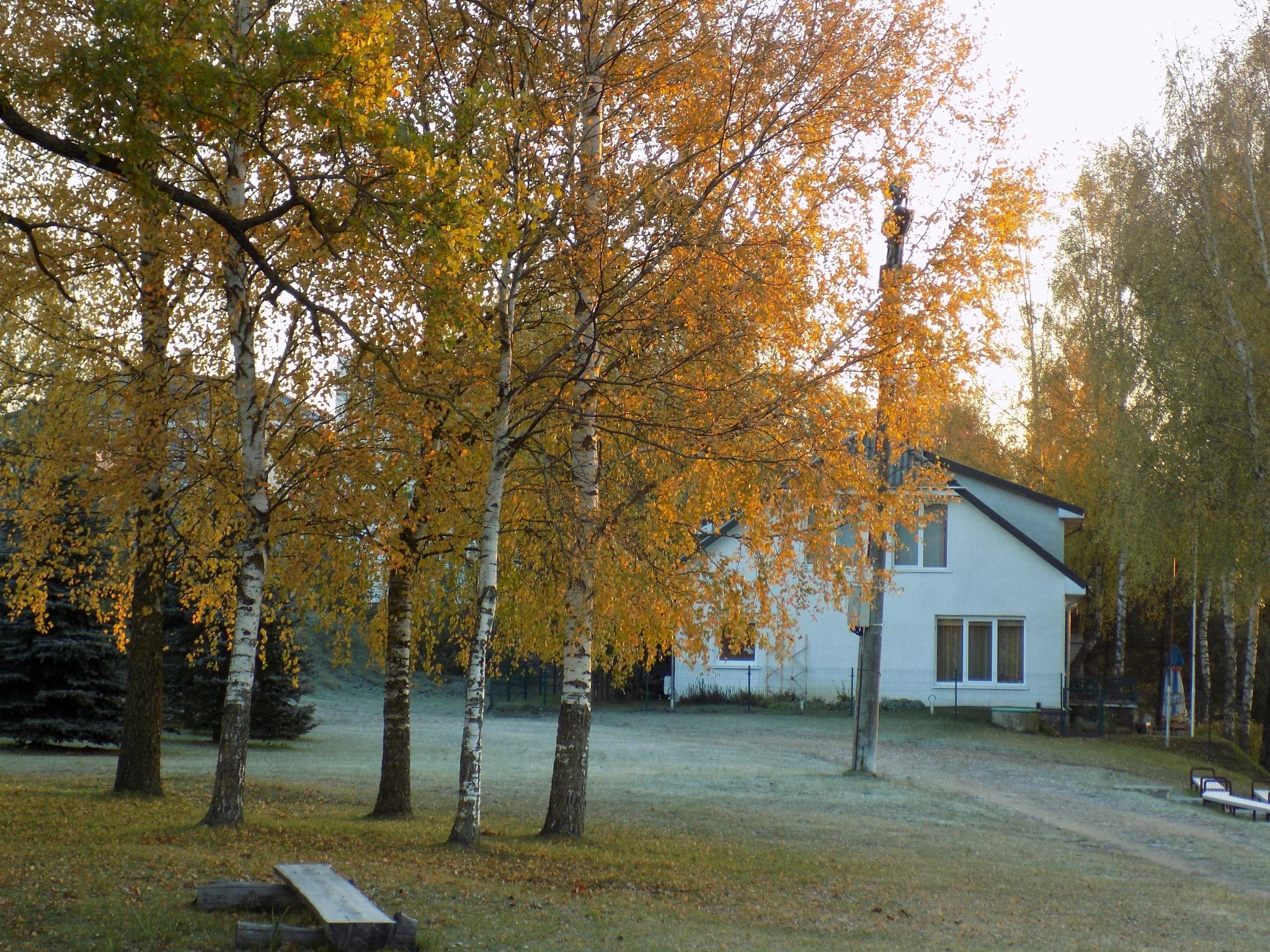 Autumn morning by uzkuraitiene62