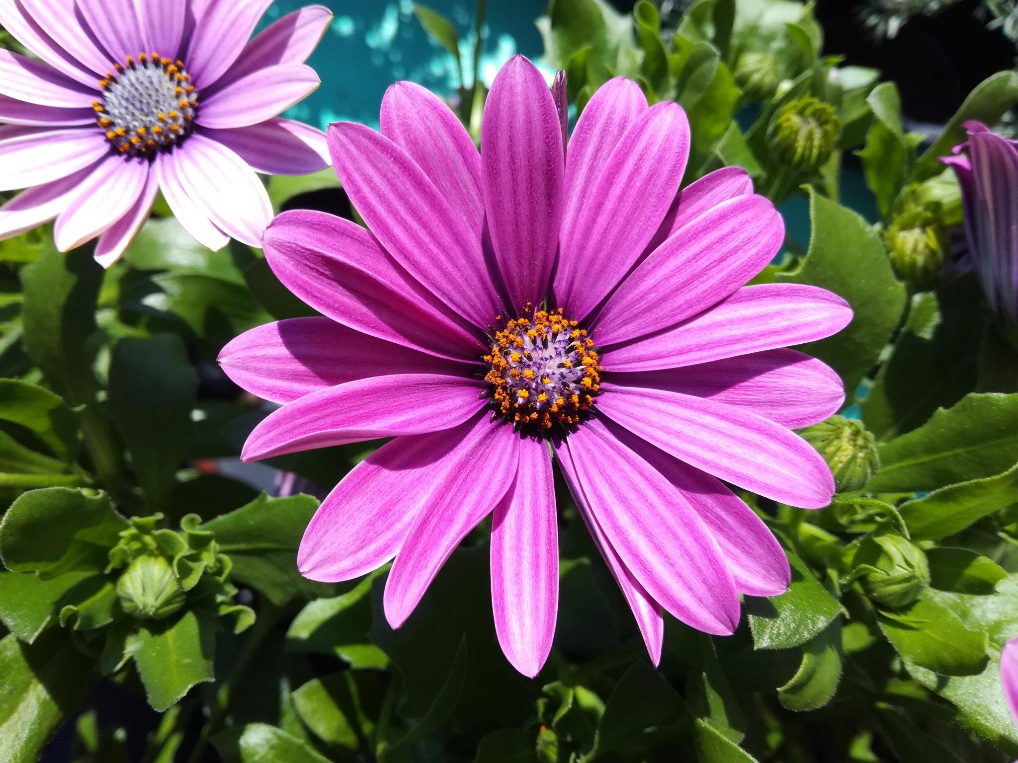 Purple flowers by uzkuraitiene62