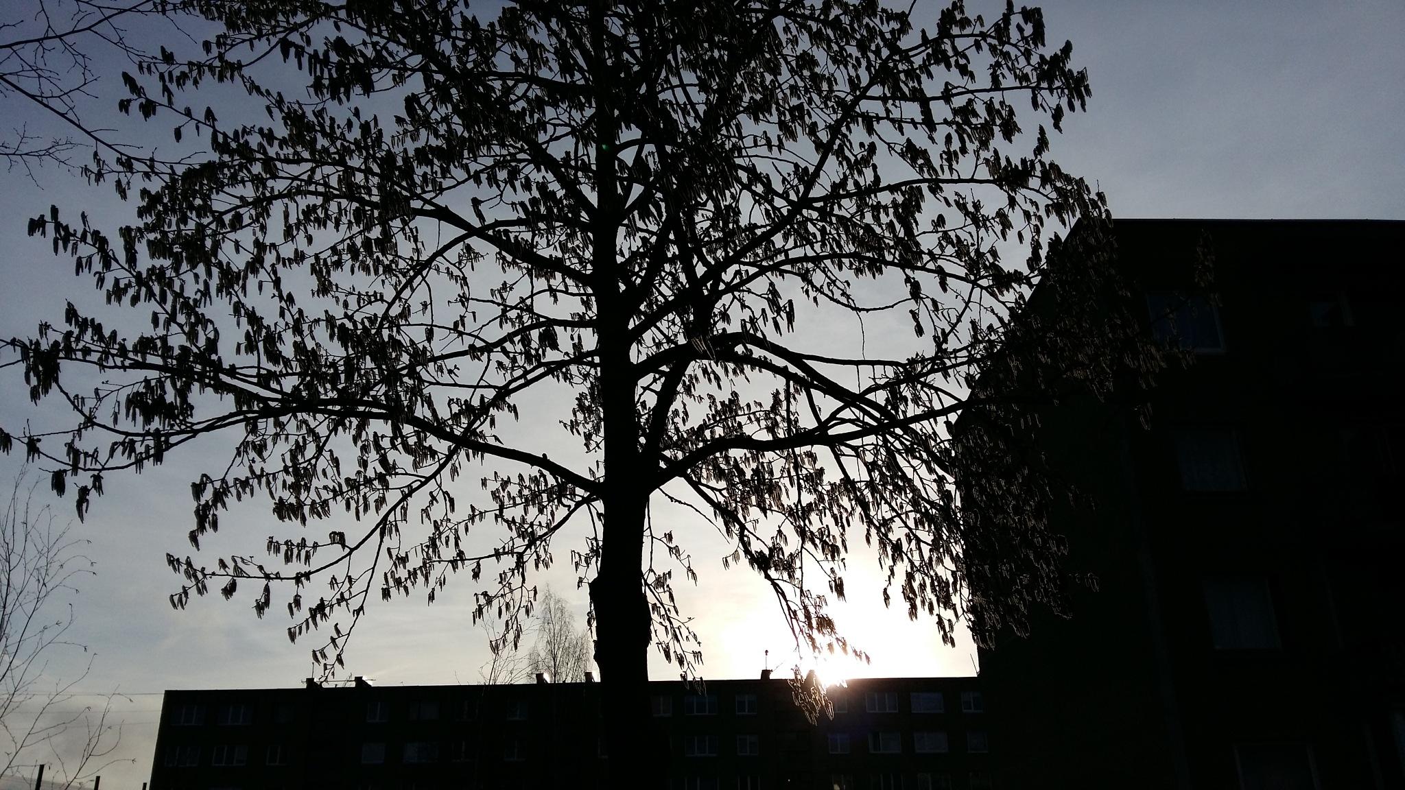 Silhouettes by uzkuraitiene62