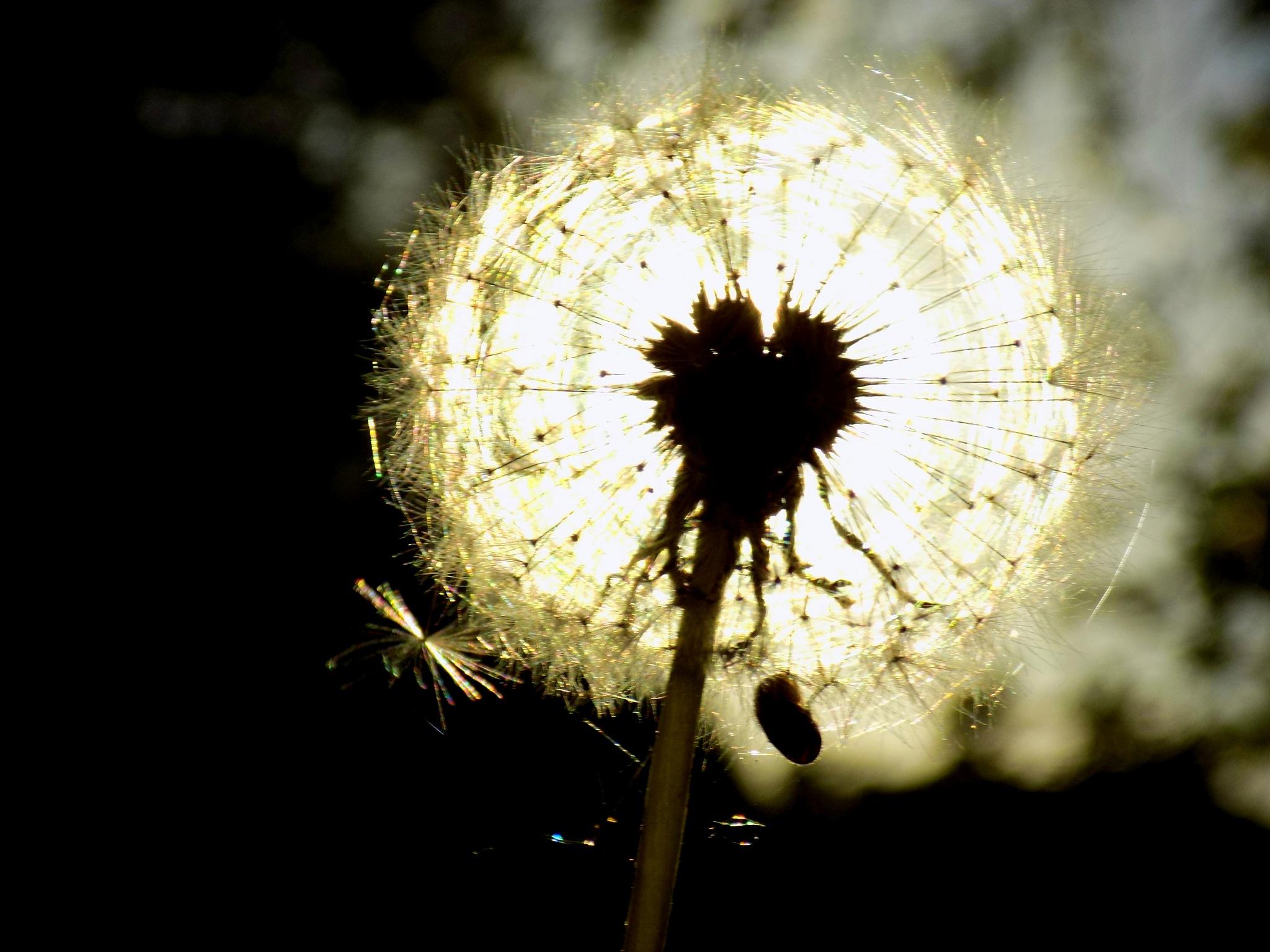 Sunlight by uzkuraitiene62