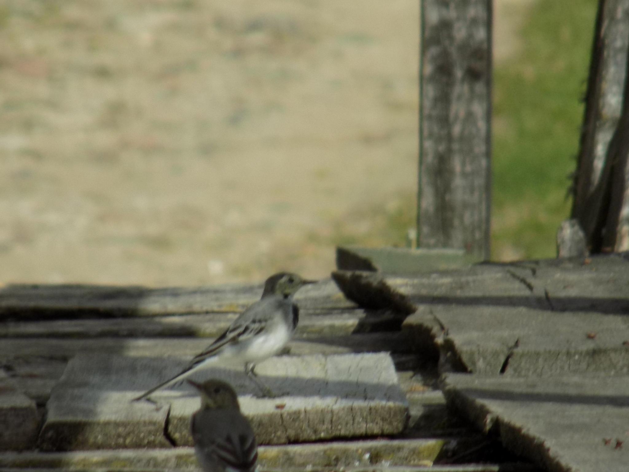 Birds by uzkuraitiene62