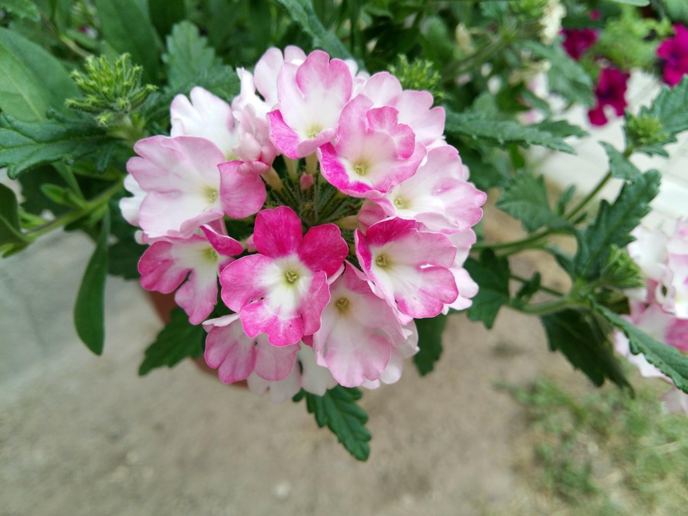 Tiny flowers by uzkuraitiene62