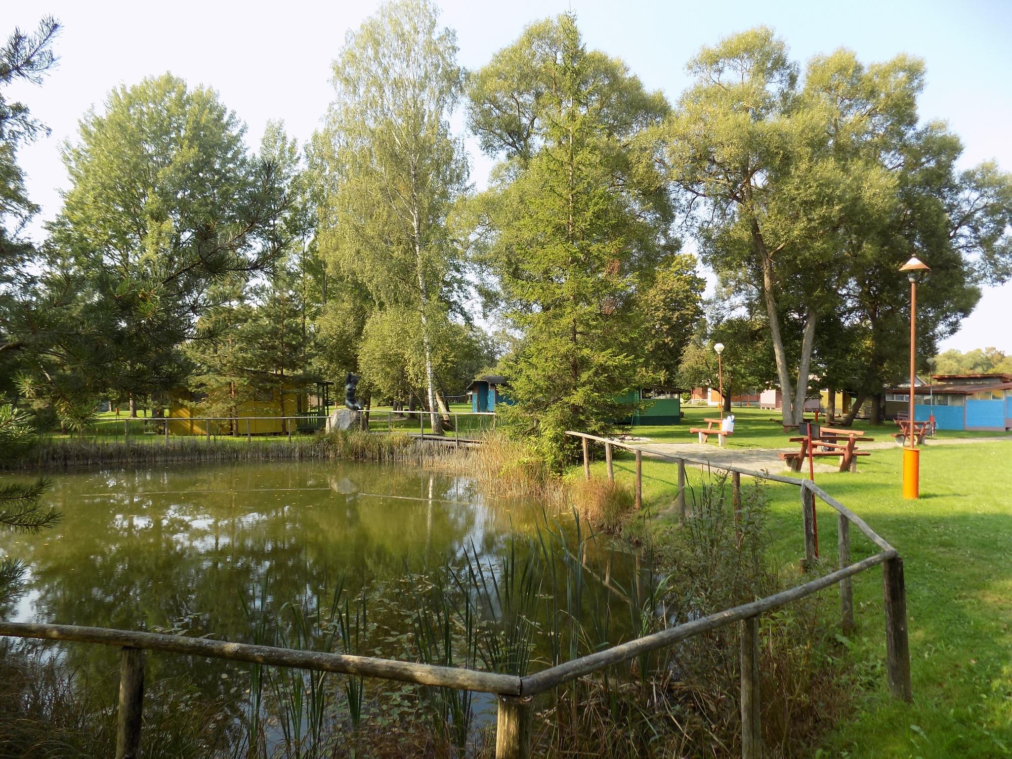 Pond and trees by uzkuraitiene62