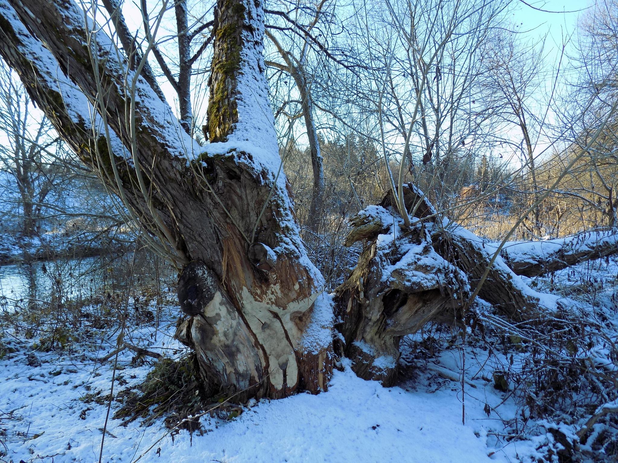 The beginning of winter by uzkuraitiene62