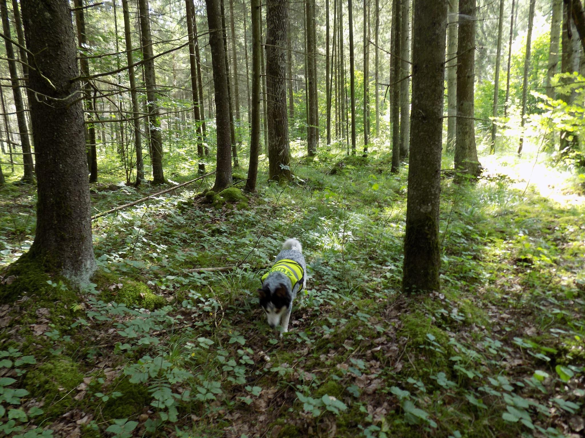 Forest by uzkuraitiene62