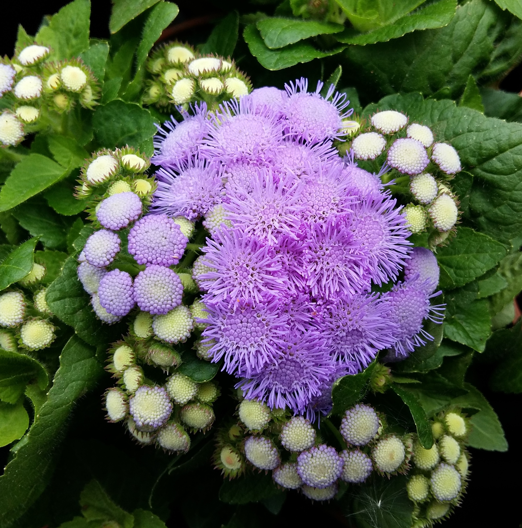 Purple flowers. by uzkuraitiene62