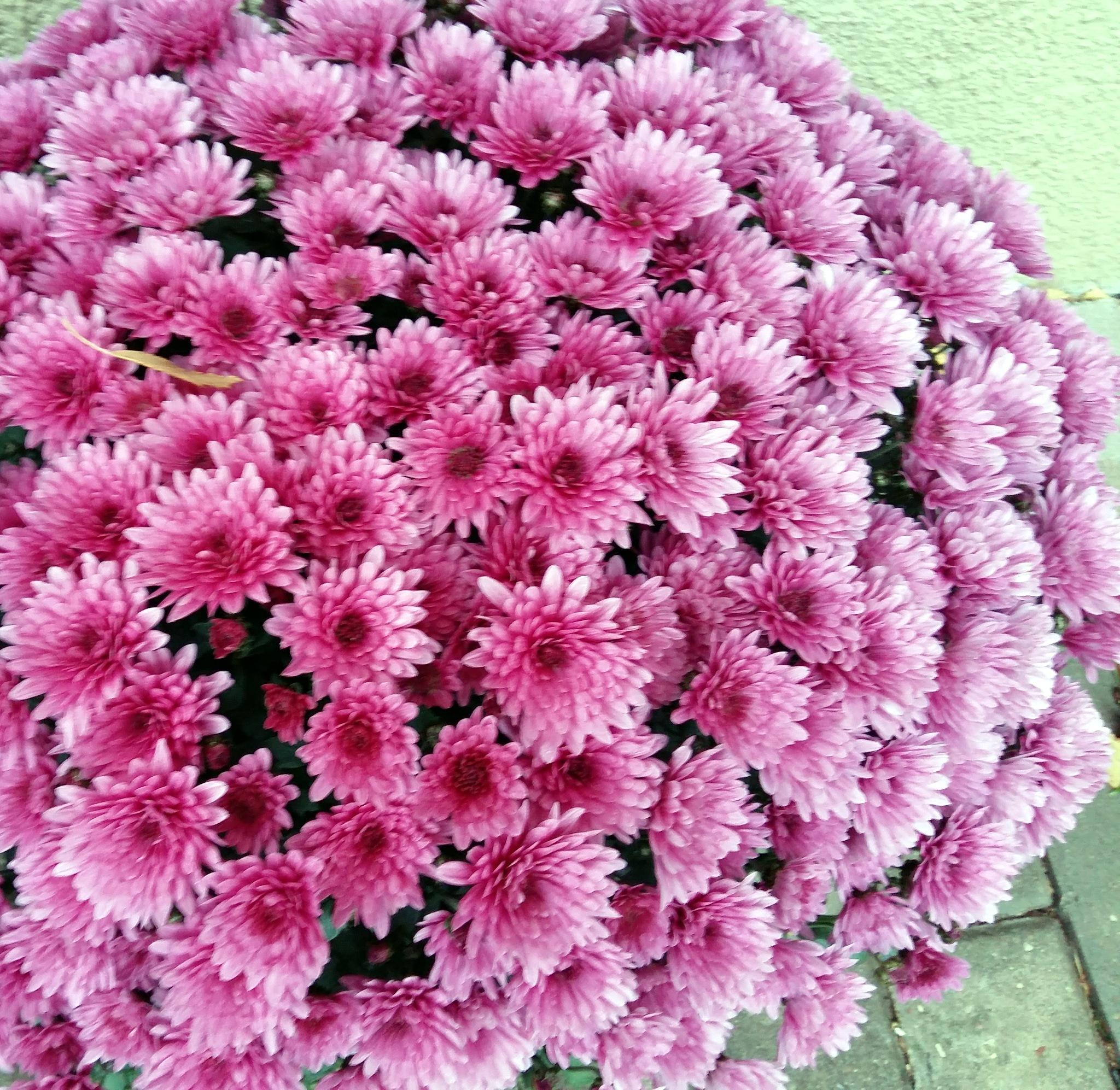 Many flowers by uzkuraitiene62