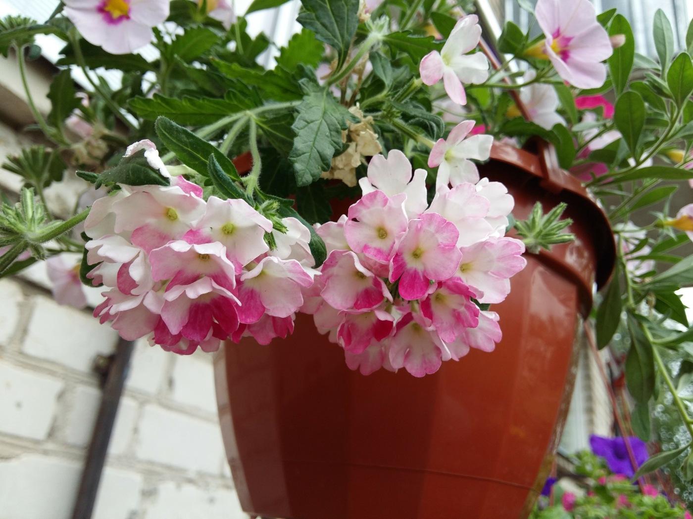 Flowers by uzkuraitiene62
