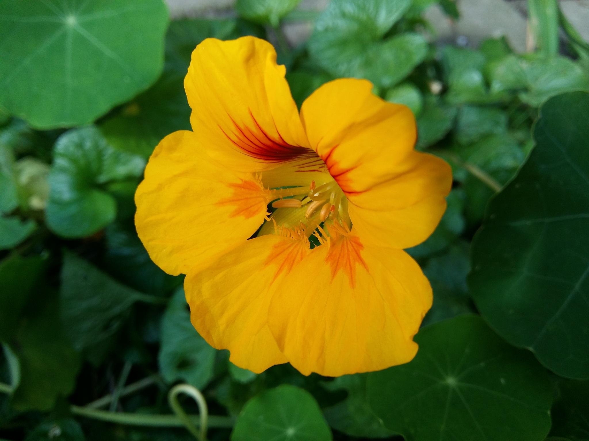 Flower by uzkuraitiene62