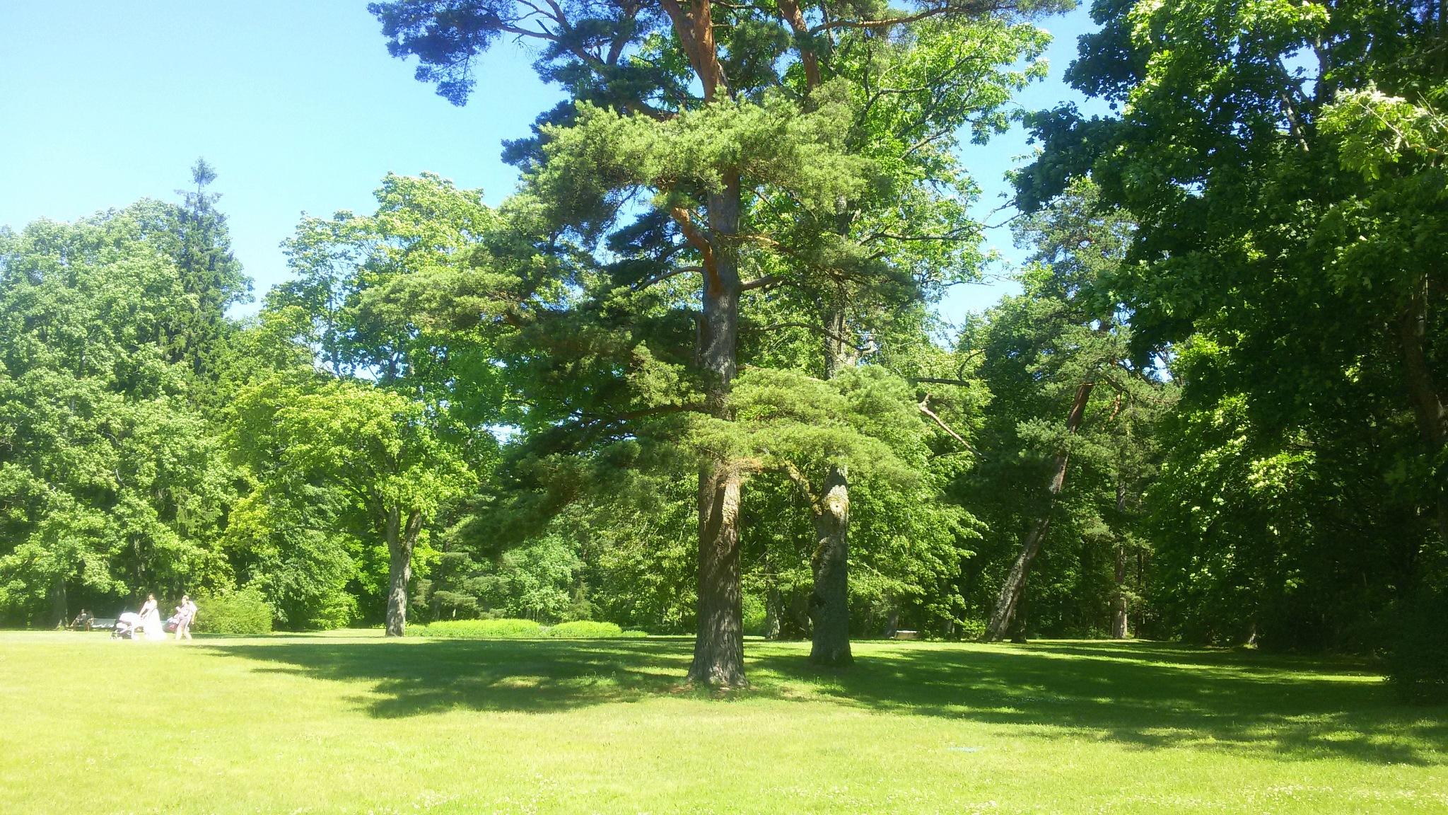 The park trees by uzkuraitiene62