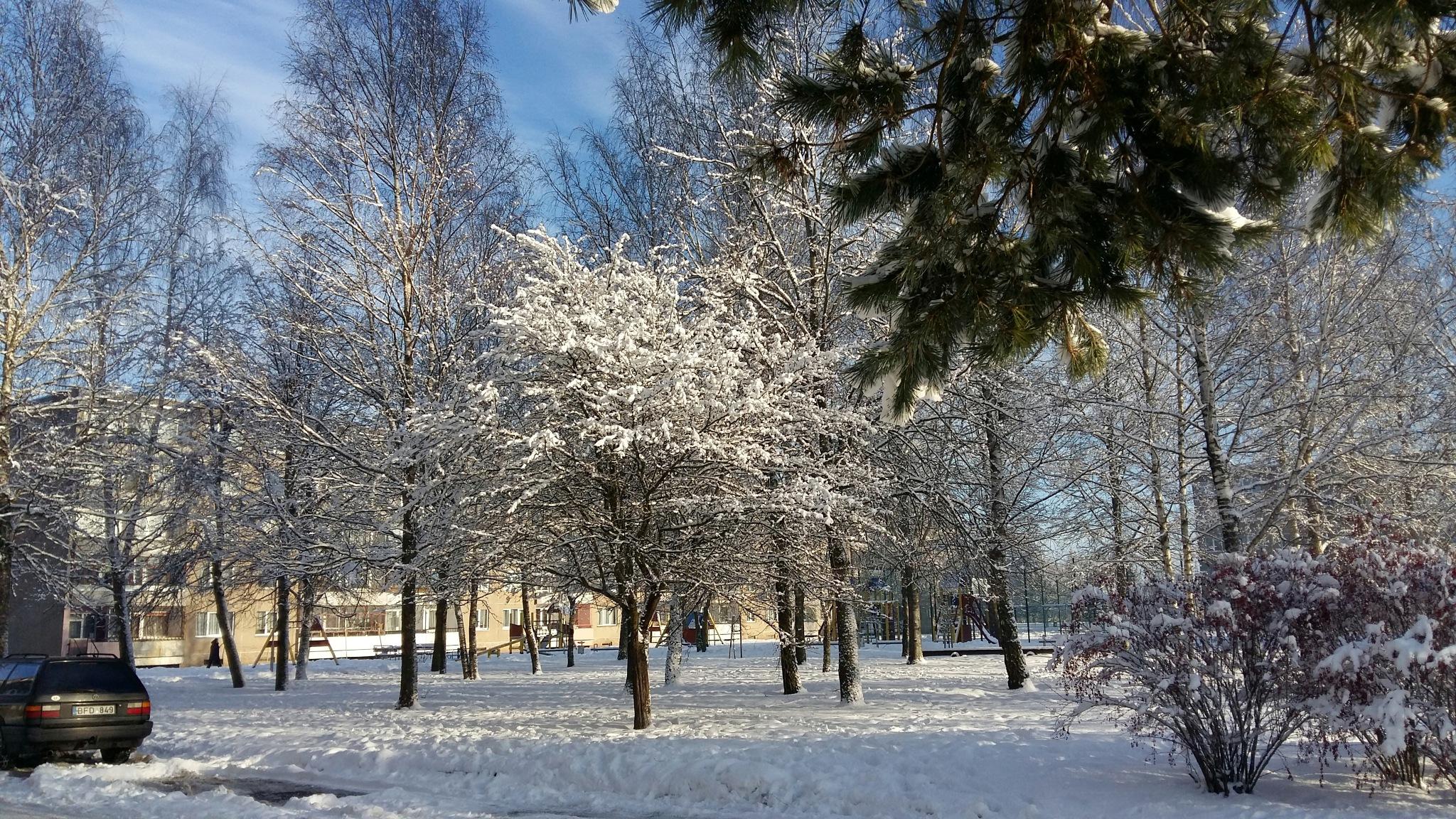 Park in winter. by uzkuraitiene62