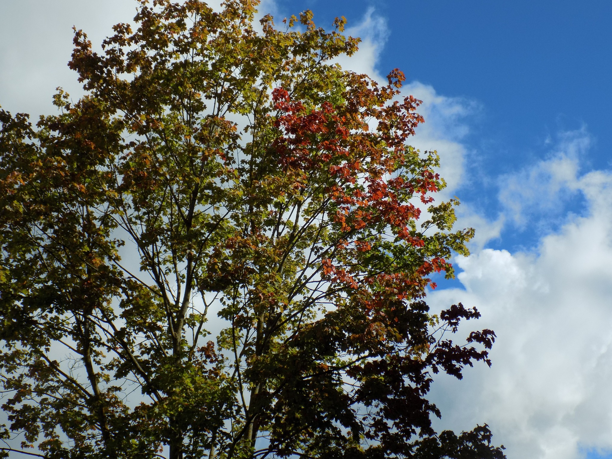 Tree and sky by uzkuraitiene62