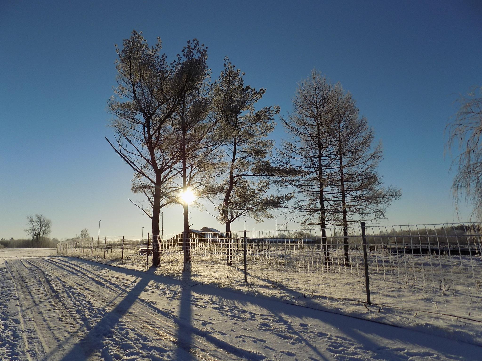 Winter evening by uzkuraitiene62