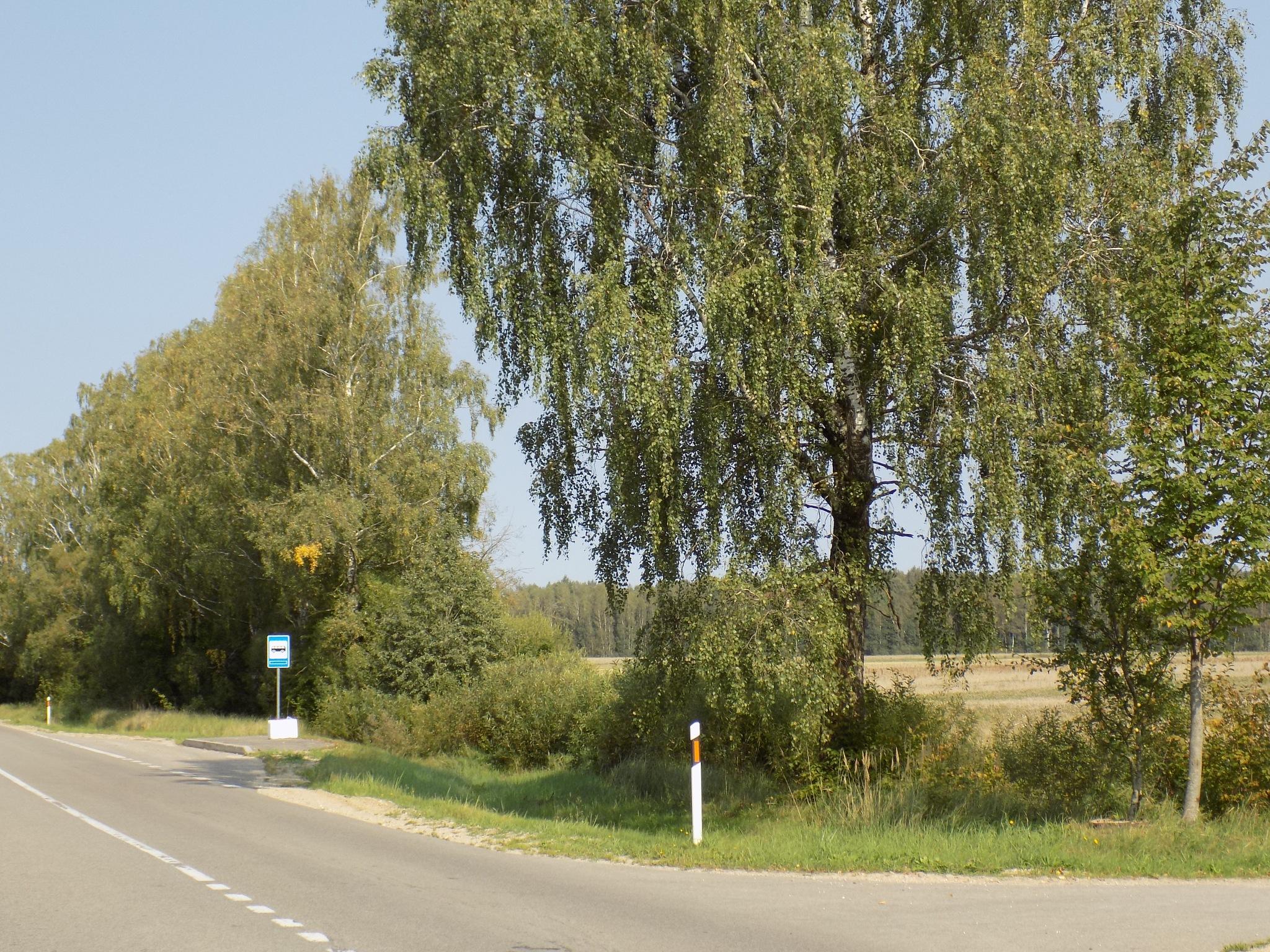 Trees near the road. by uzkuraitiene62