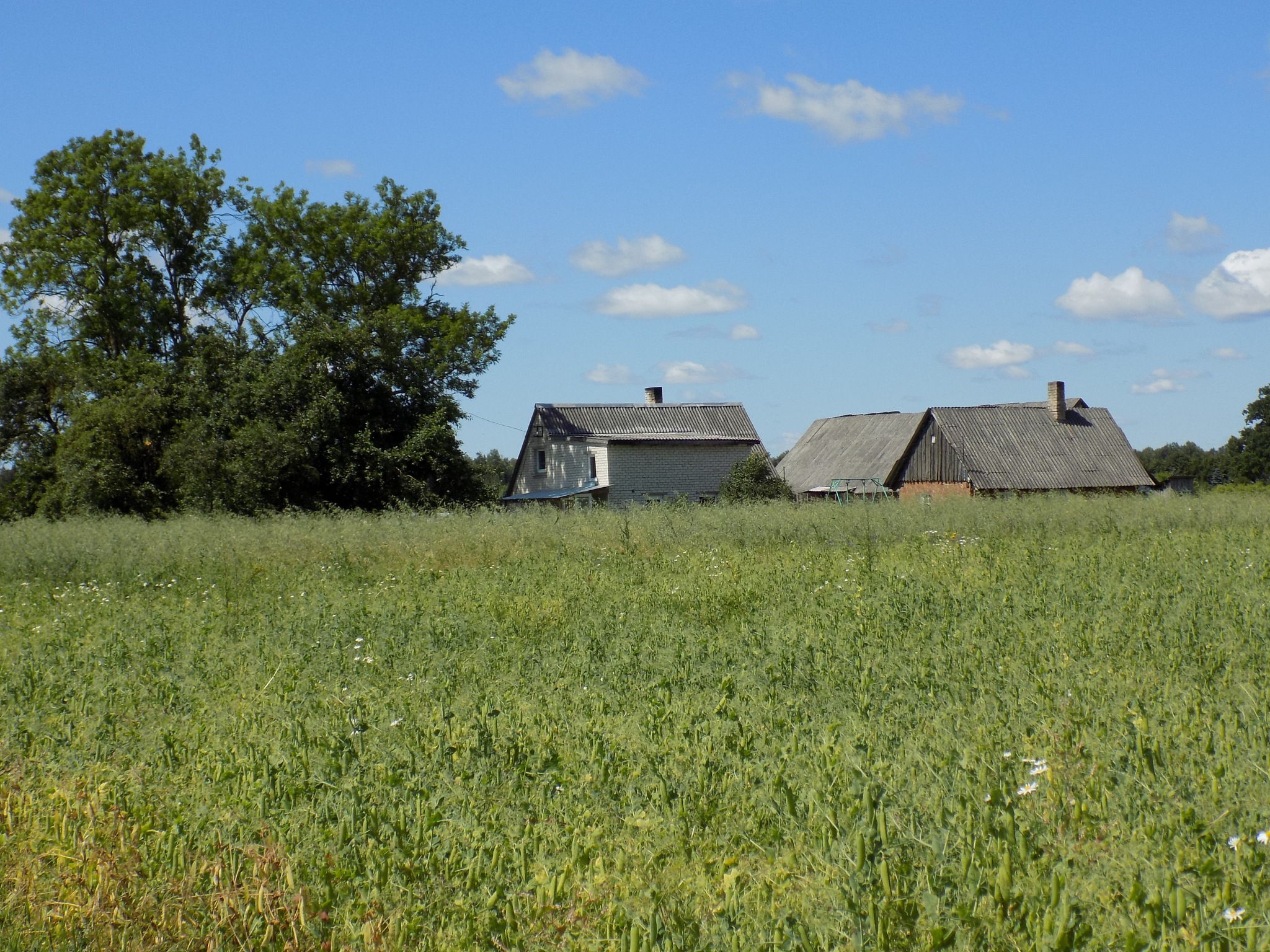 Farmstead in the middle of the fields by uzkuraitiene62
