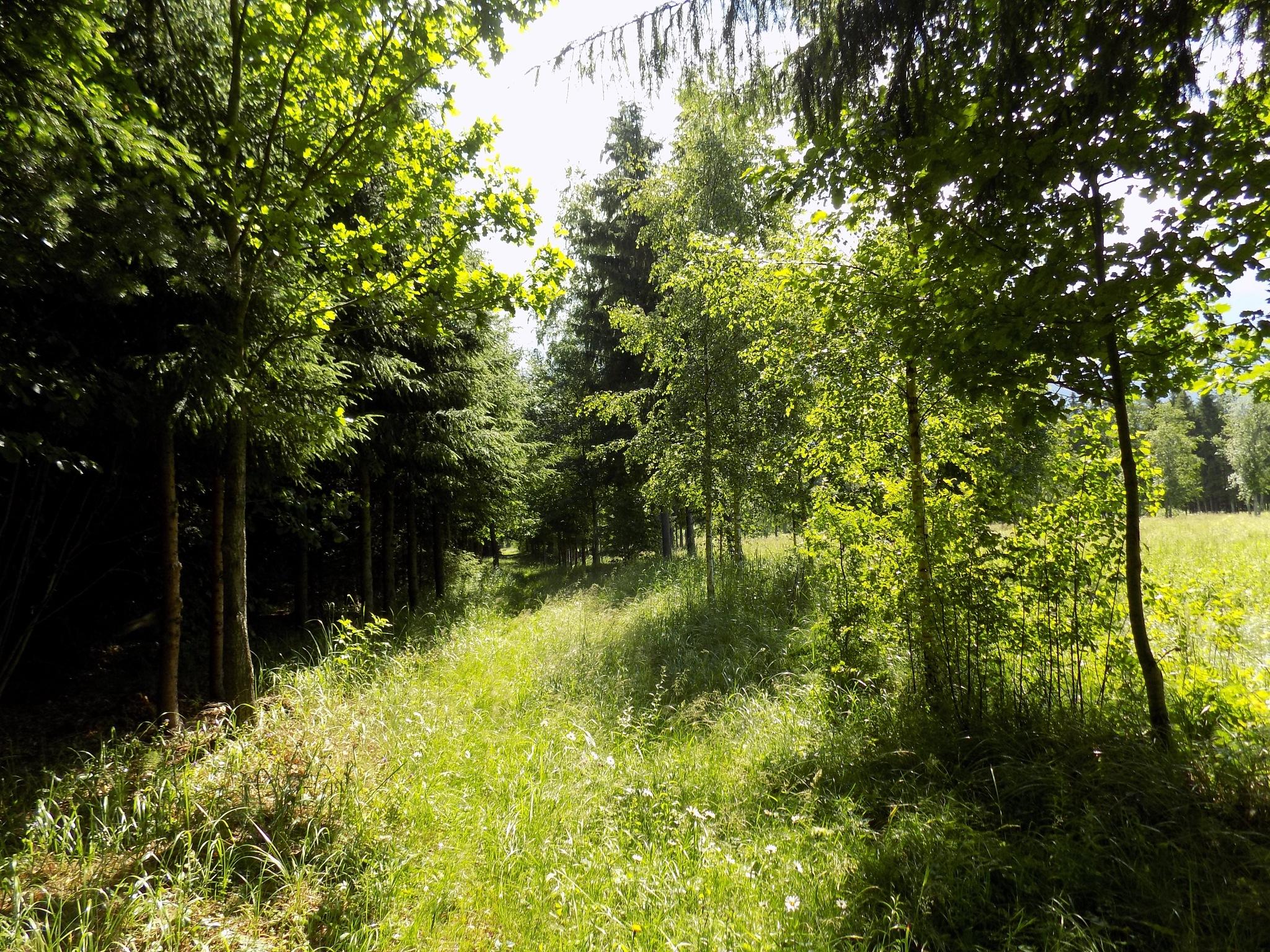In the forest by uzkuraitiene62