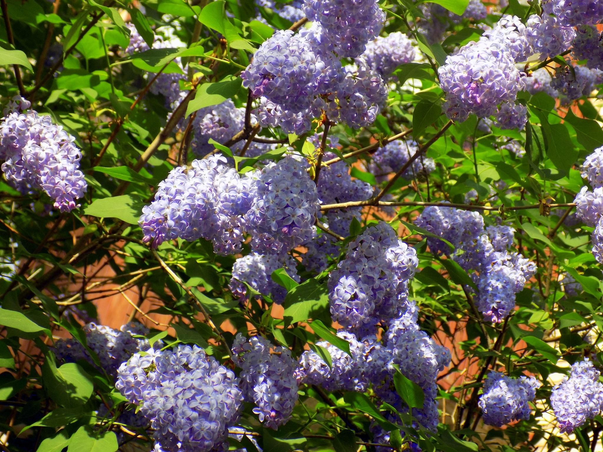 Flowering by uzkuraitiene62