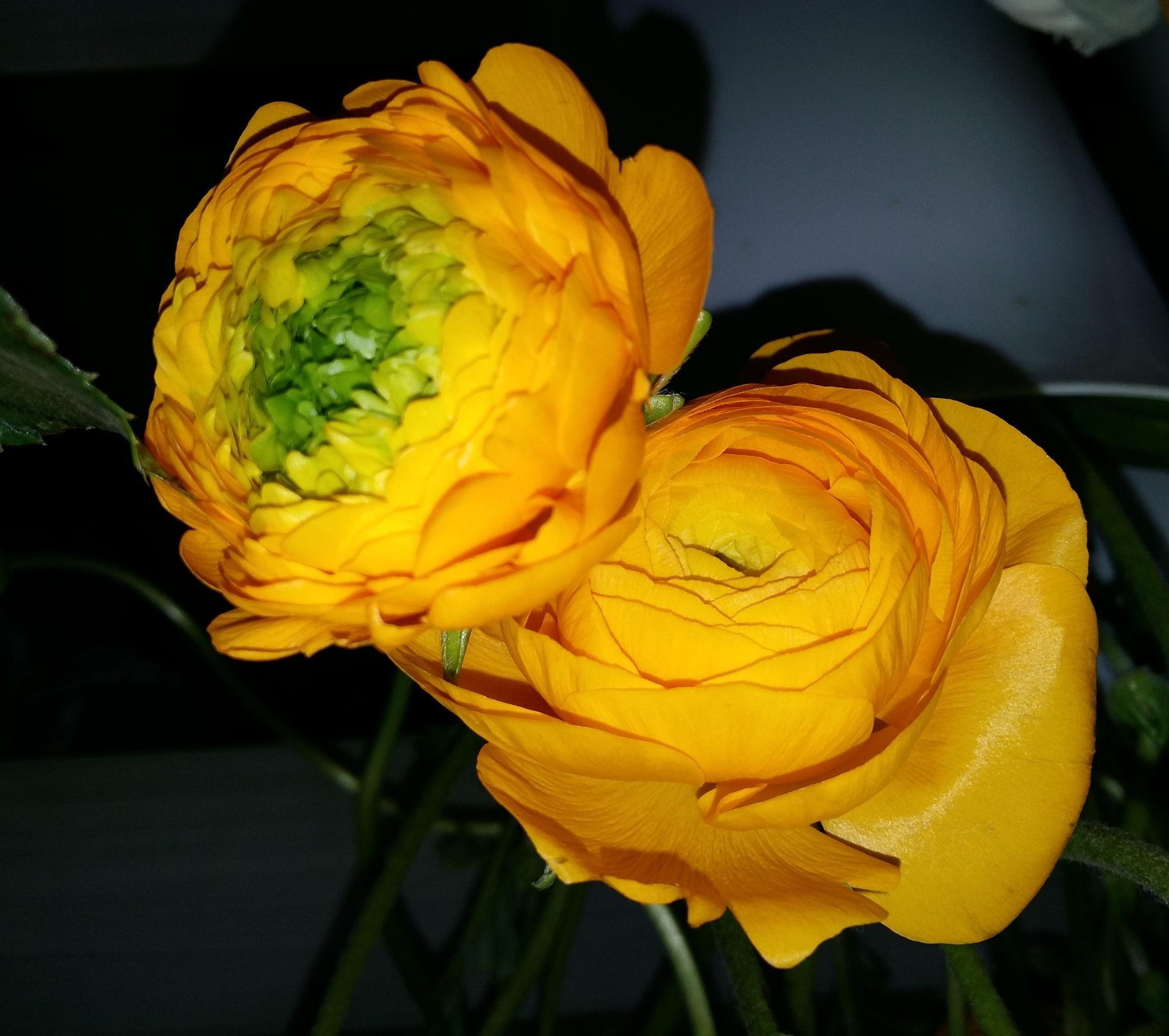 Two flowers by uzkuraitiene62