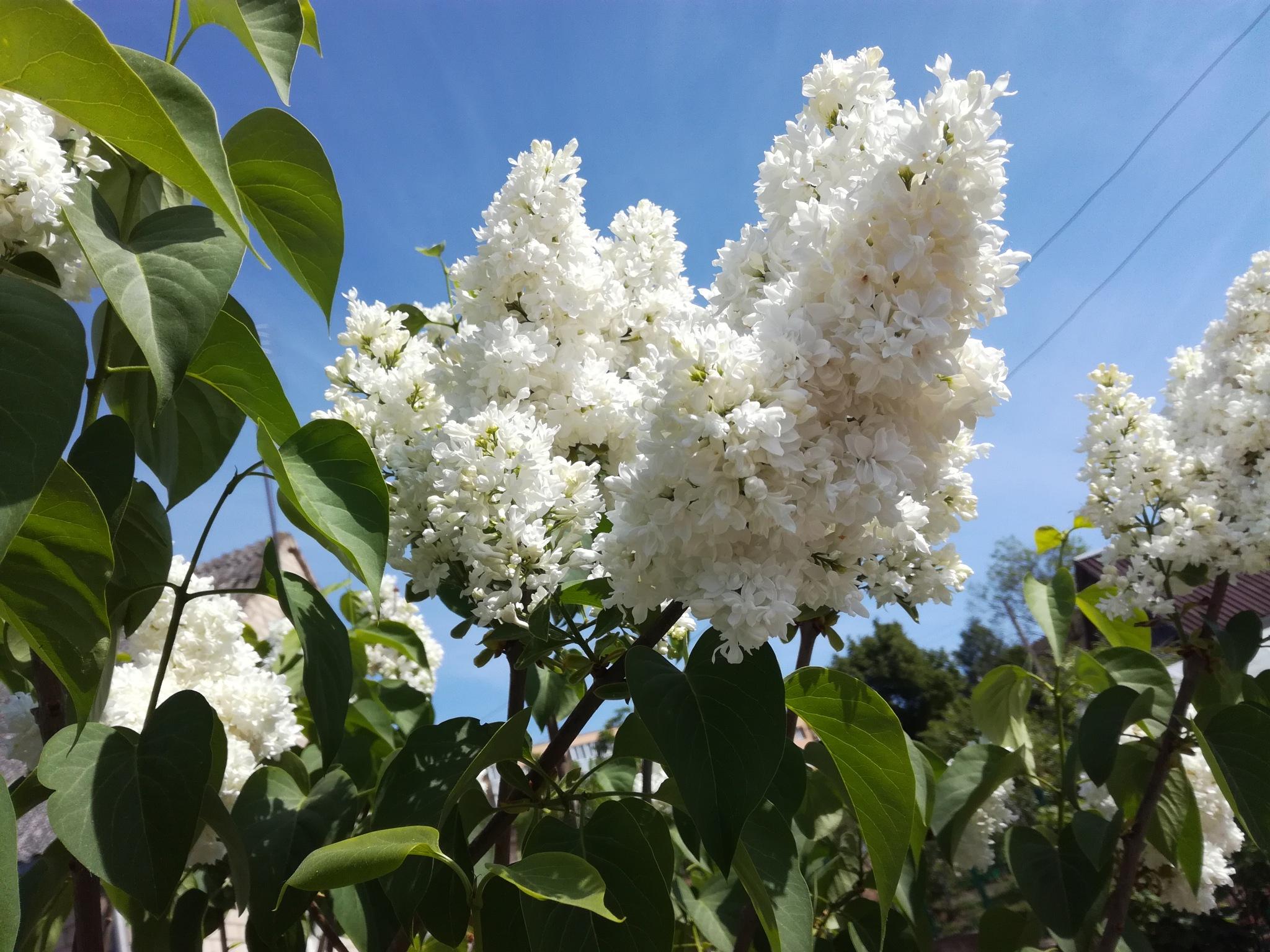 Spring flowering by uzkuraitiene62