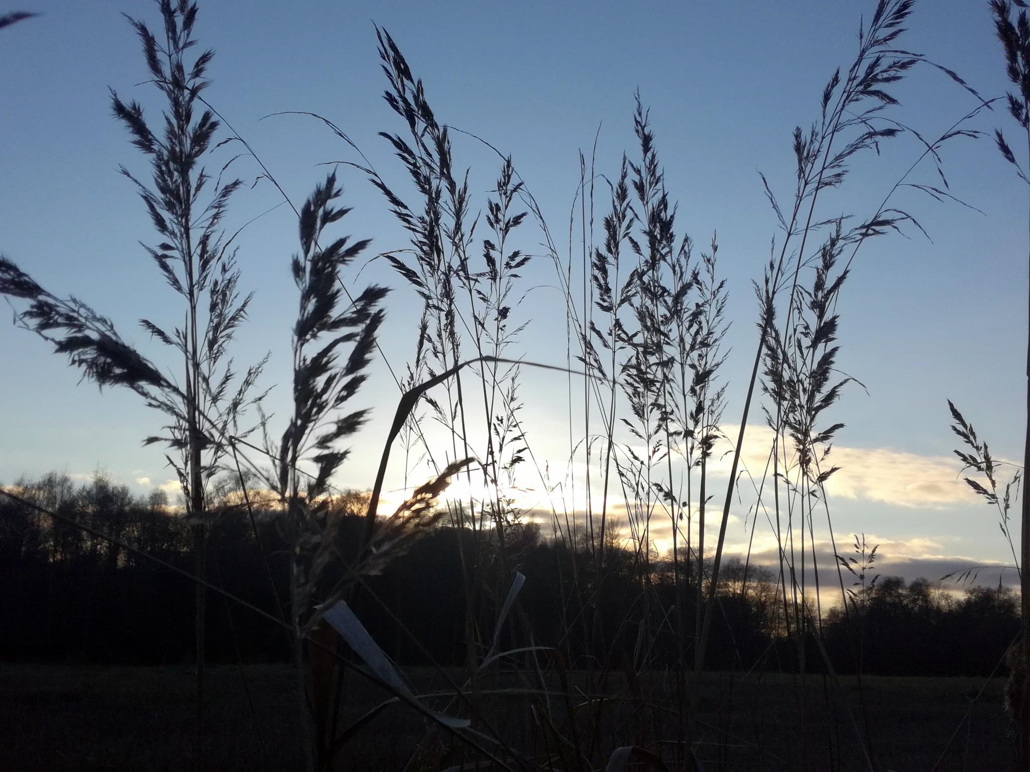 Evening by uzkuraitiene62