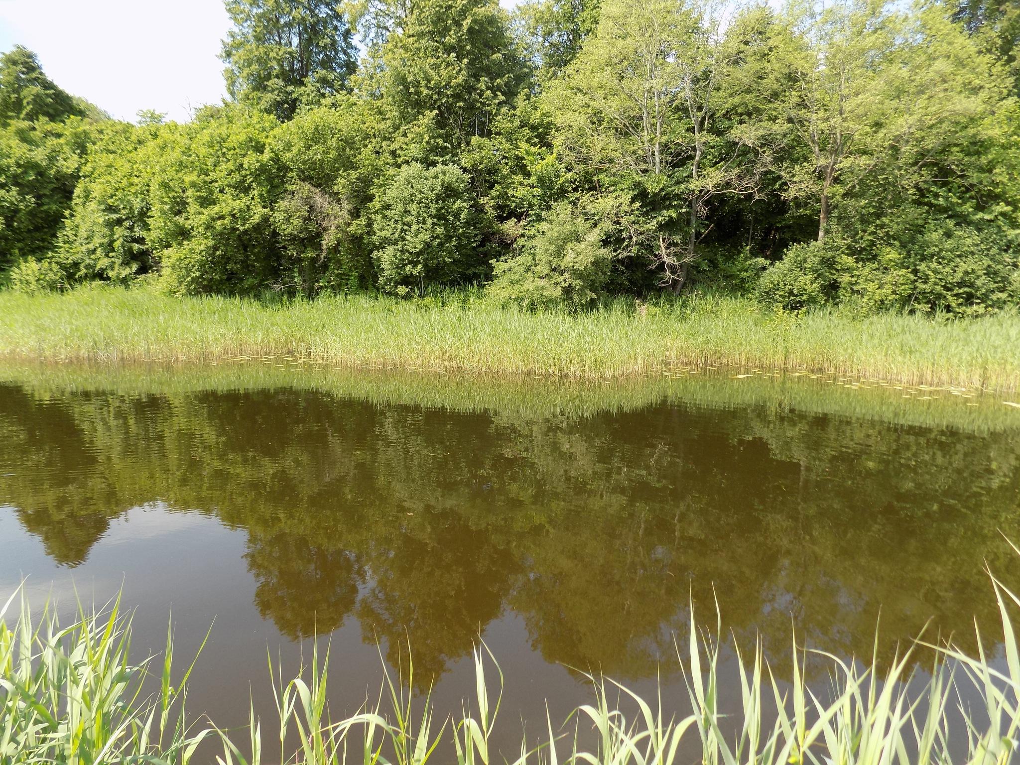 Green River shore by uzkuraitiene62