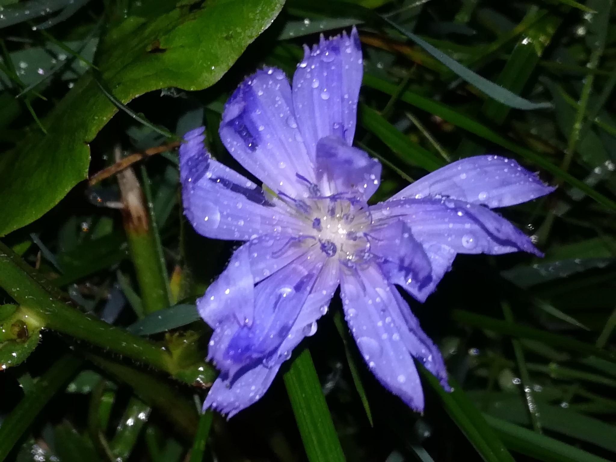 Night after rain by uzkuraitiene62