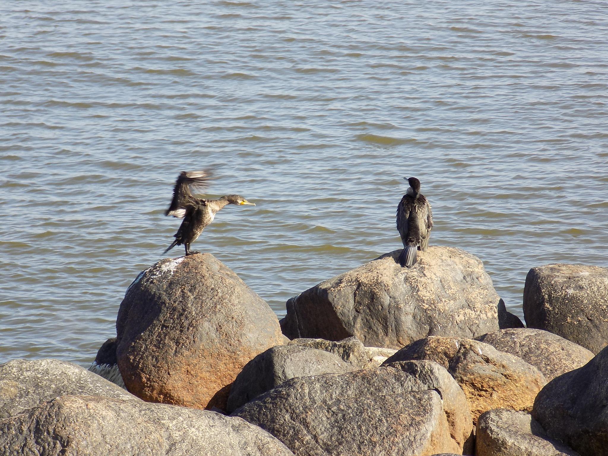 Sea birds by uzkuraitiene62