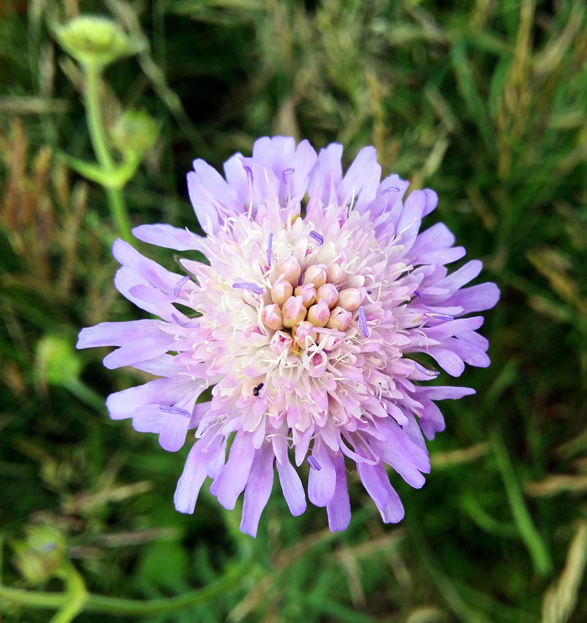 Flower. by uzkuraitiene62