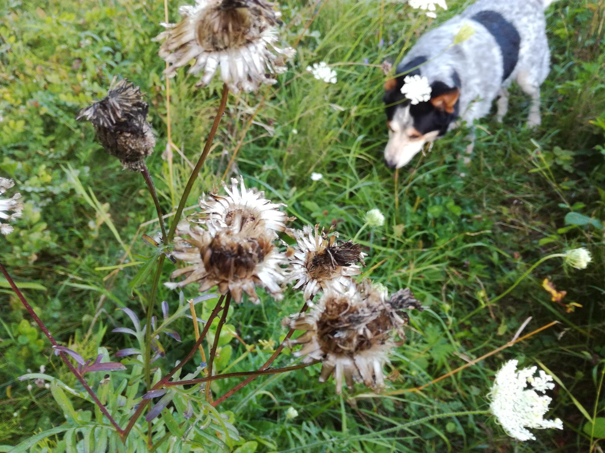 In the meadow by uzkuraitiene62