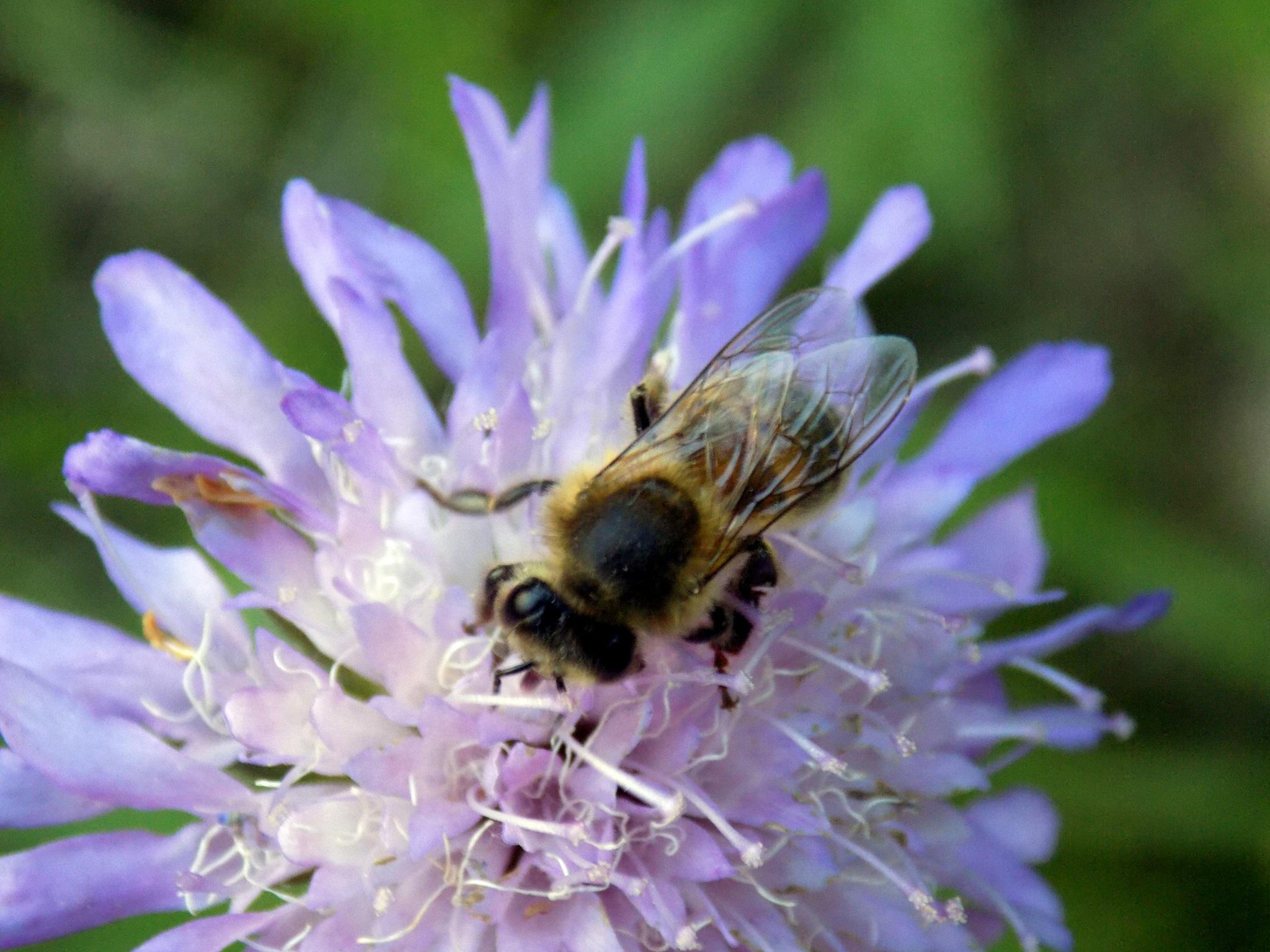 Bee by uzkuraitiene62