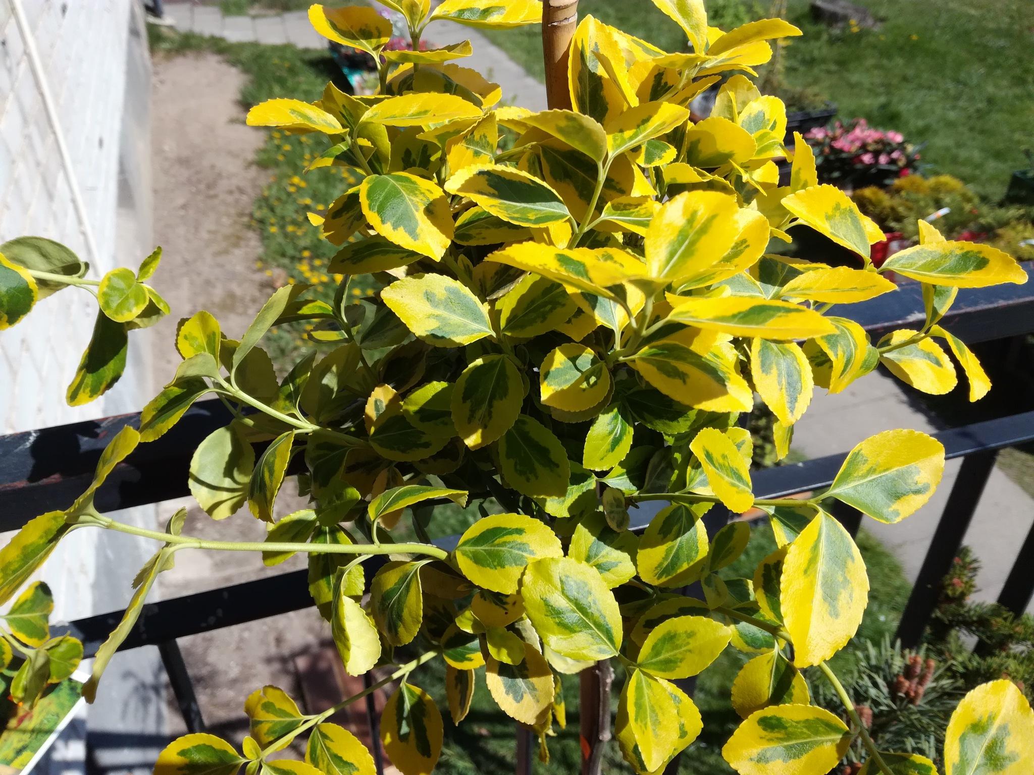 Multicolour leaves by uzkuraitiene62