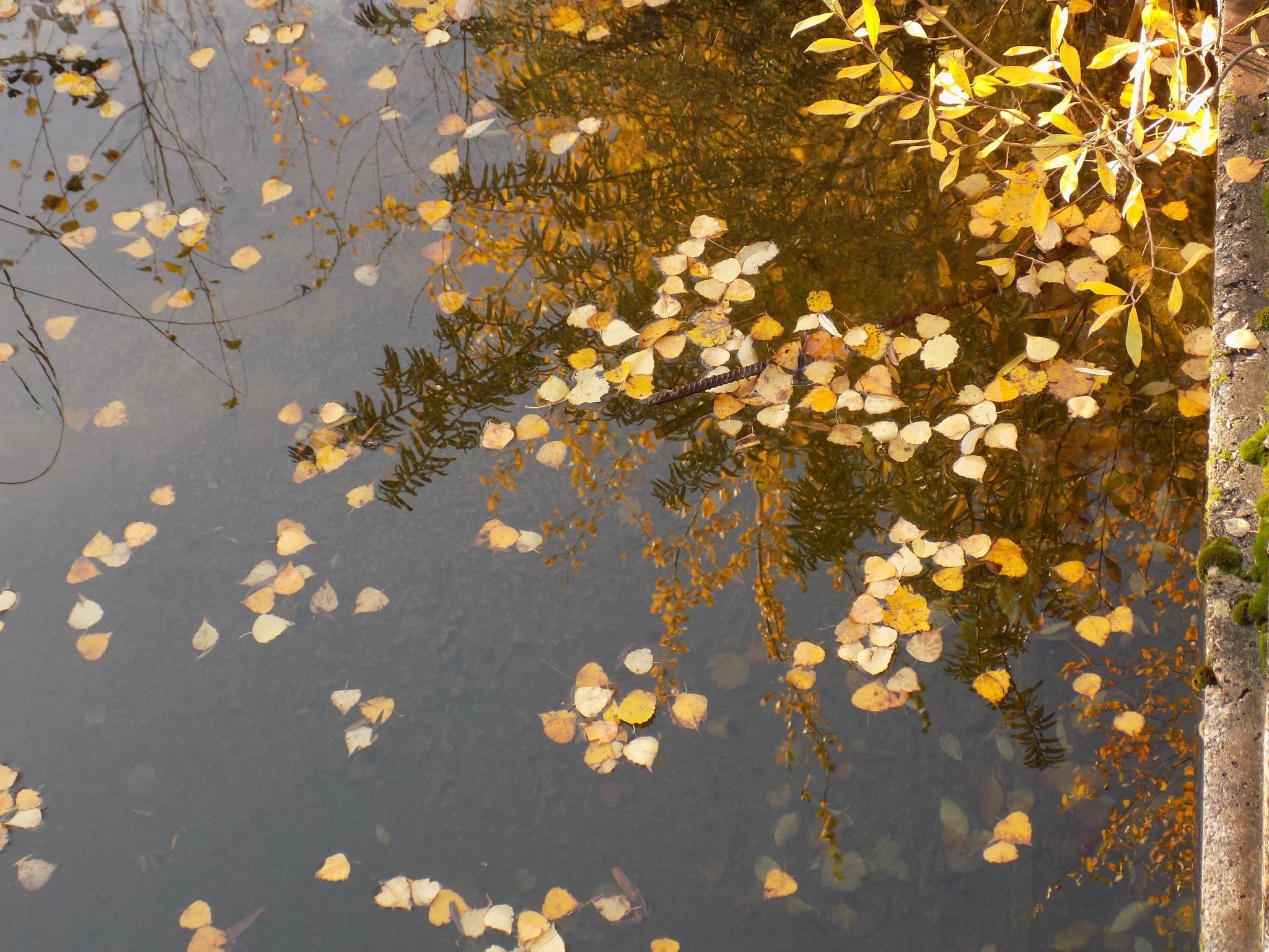 Nature in autumn by uzkuraitiene62