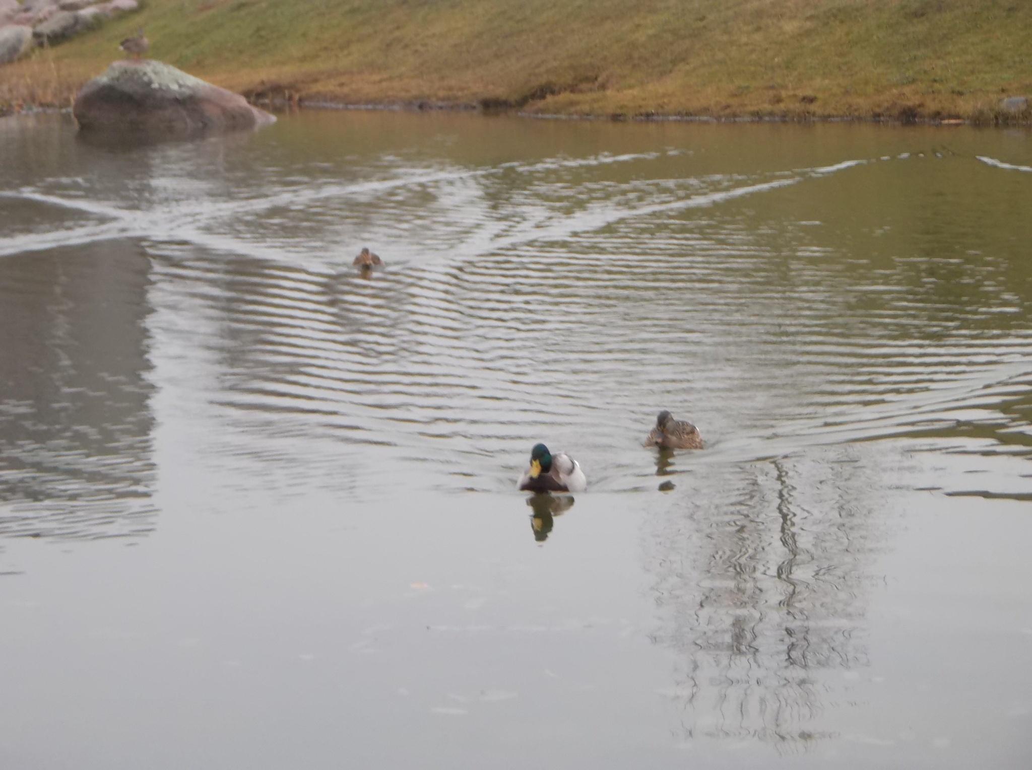 Pond in fog by uzkuraitiene62