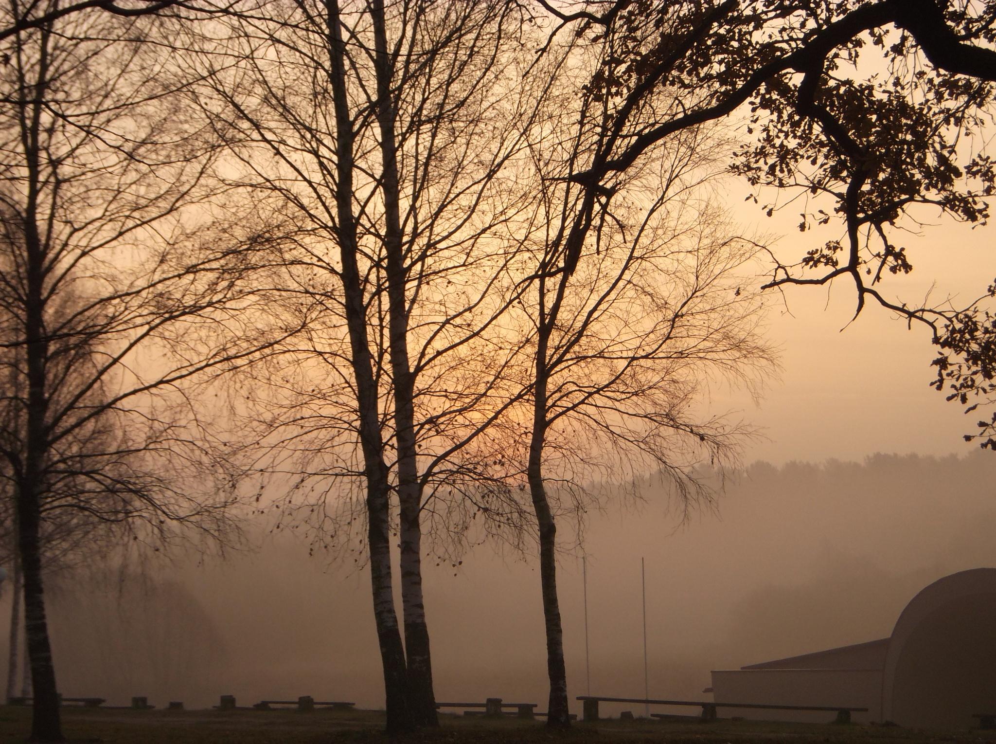 Trees in fog by uzkuraitiene62