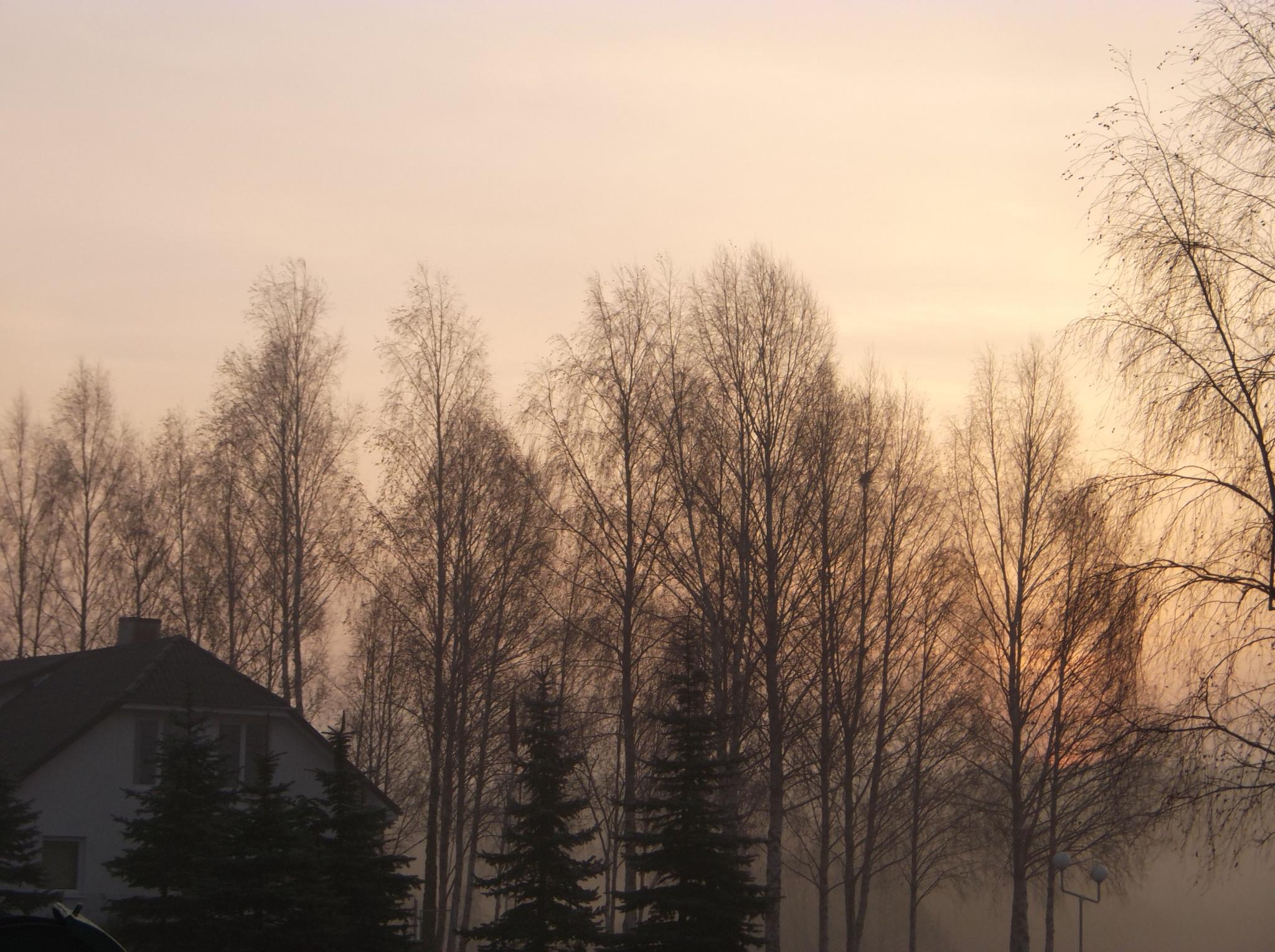Early morning by uzkuraitiene62