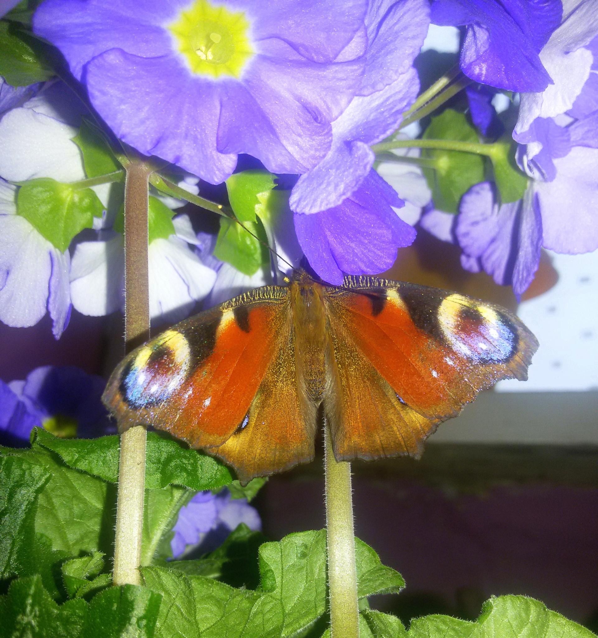 Flower and butterfly. by uzkuraitiene62