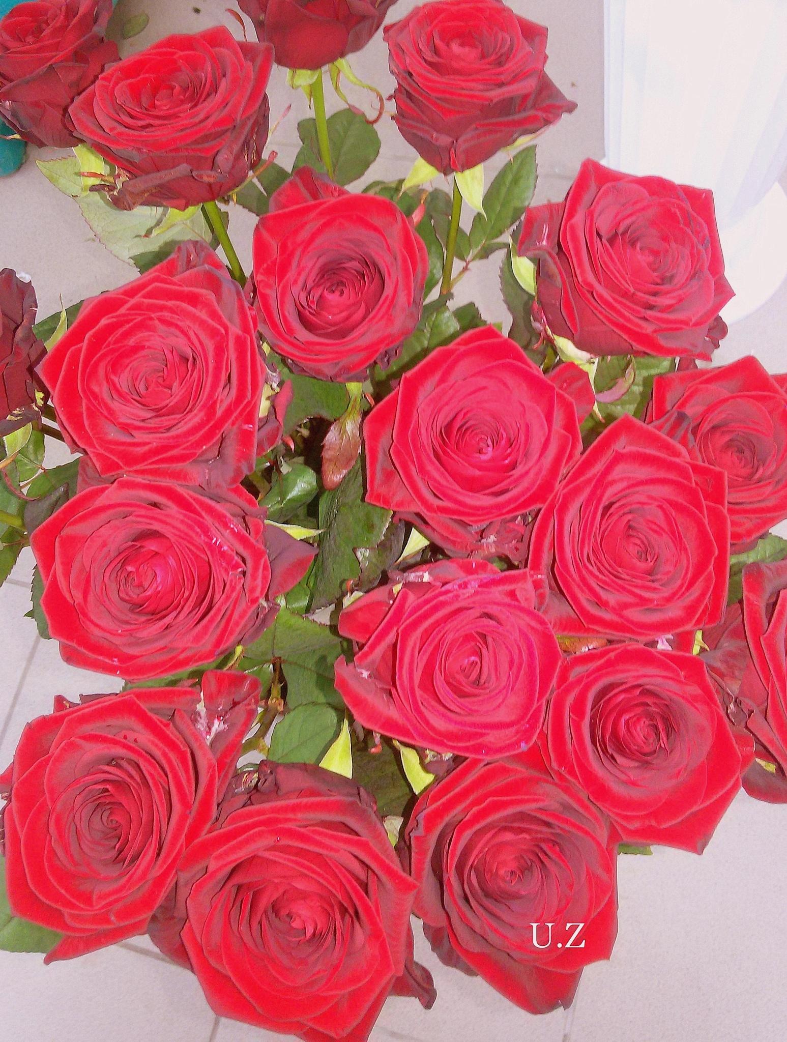 Red roses. by uzkuraitiene62