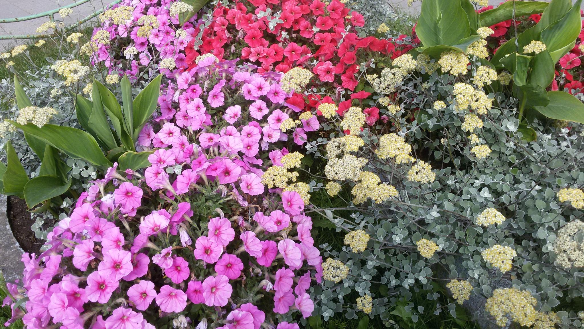 Many flowers. by uzkuraitiene62
