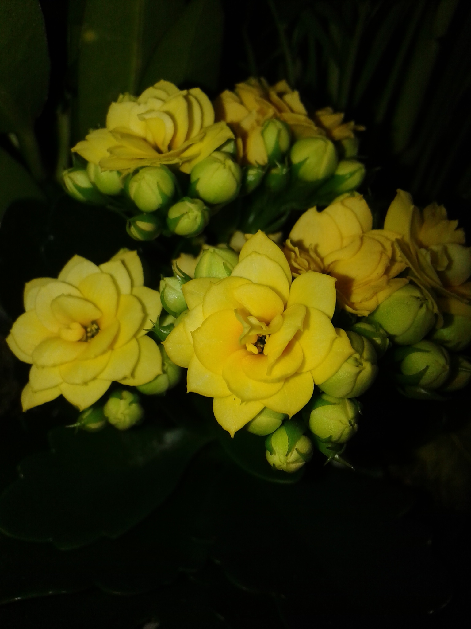 Small flowers-2 by uzkuraitiene62