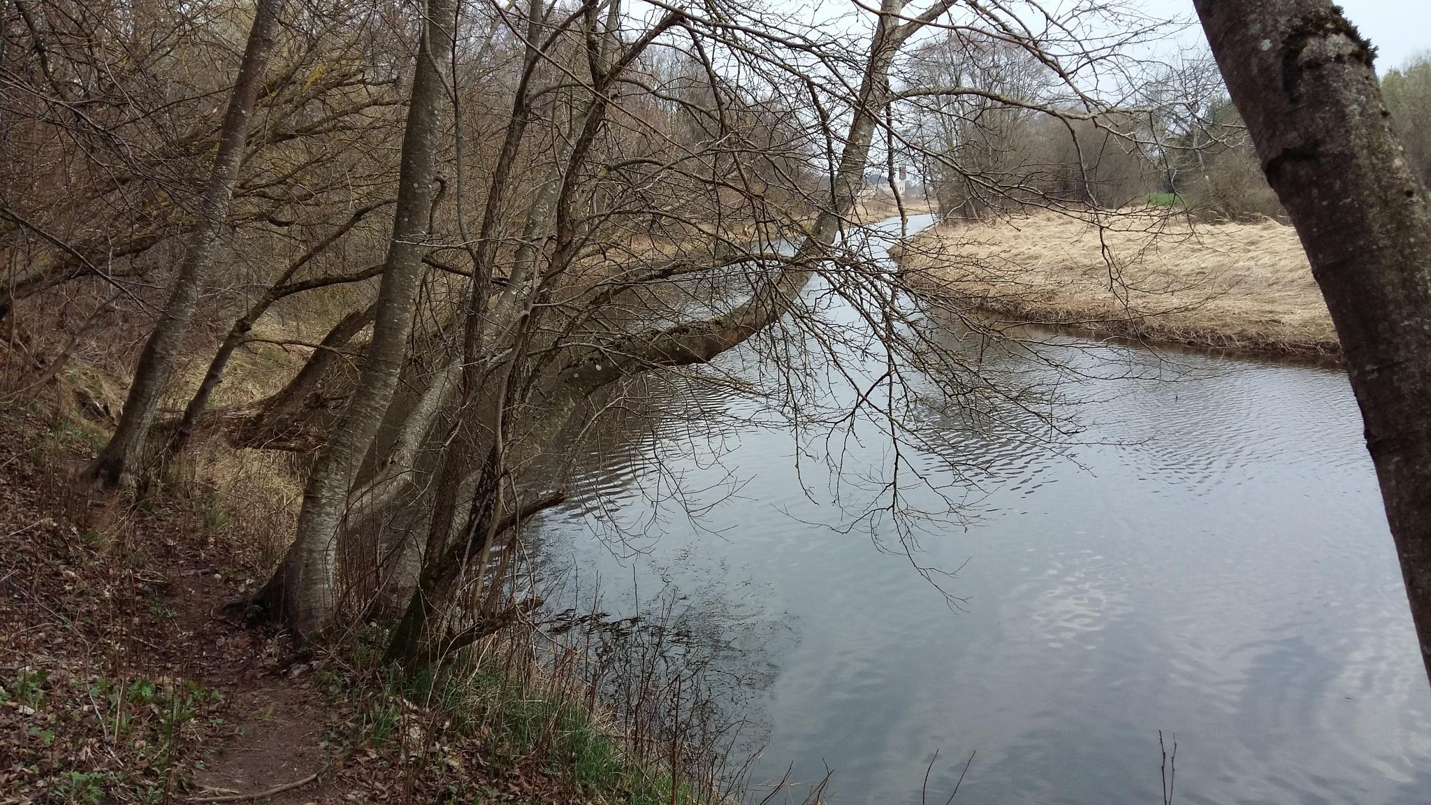 Riverside trees. by uzkuraitiene62