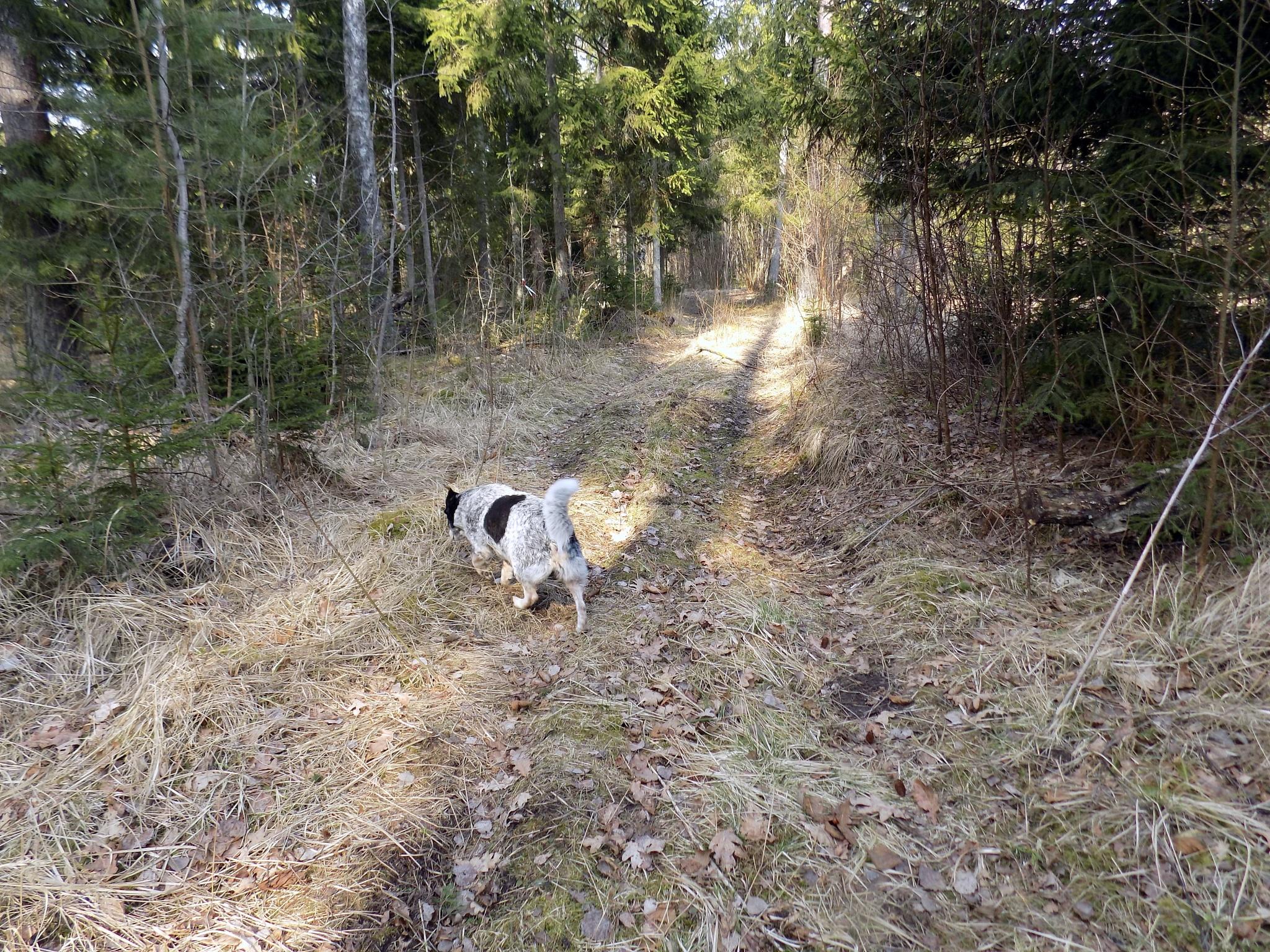 Forest trail by uzkuraitiene62