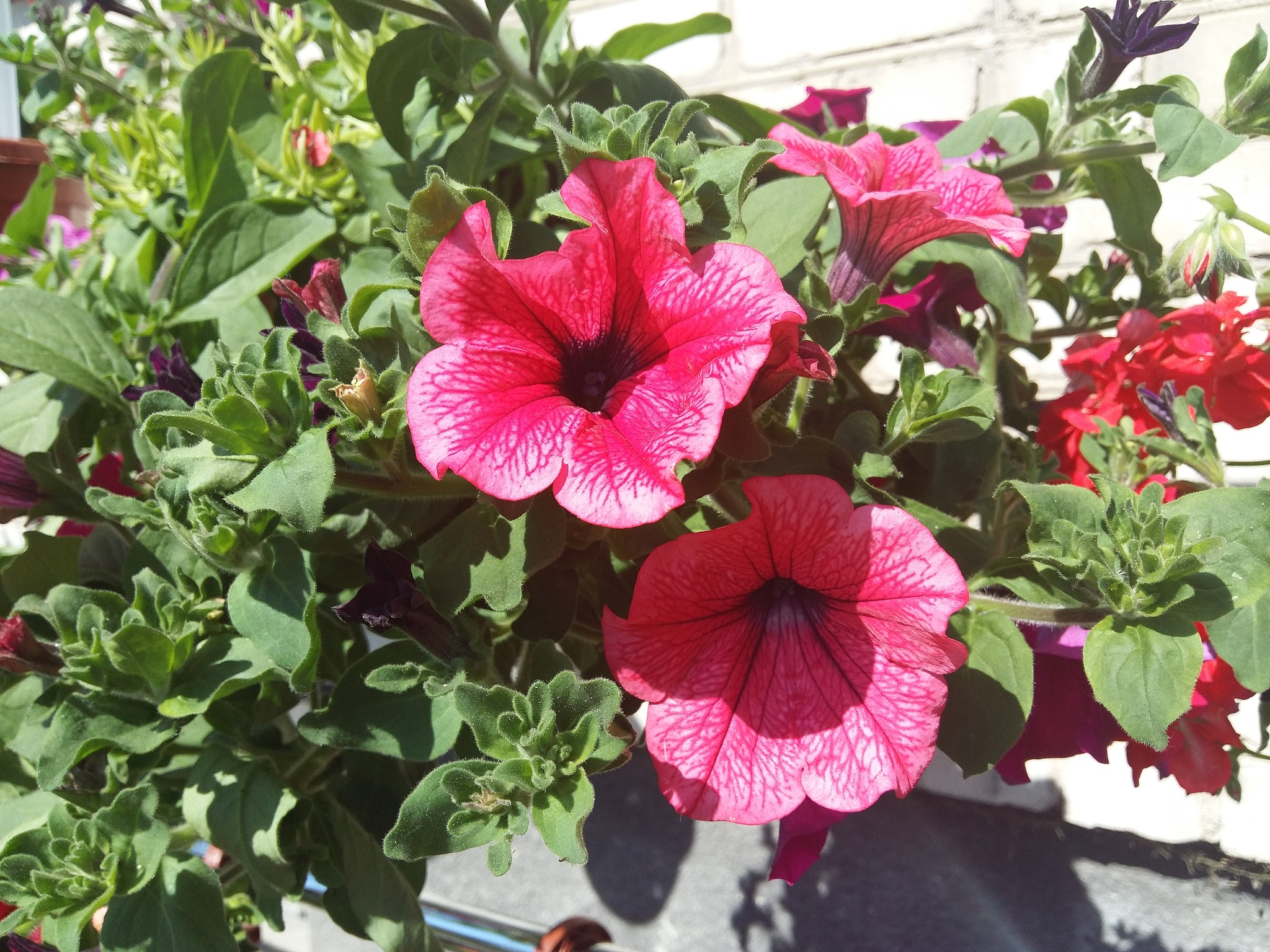 Beautiful flowers. by uzkuraitiene62